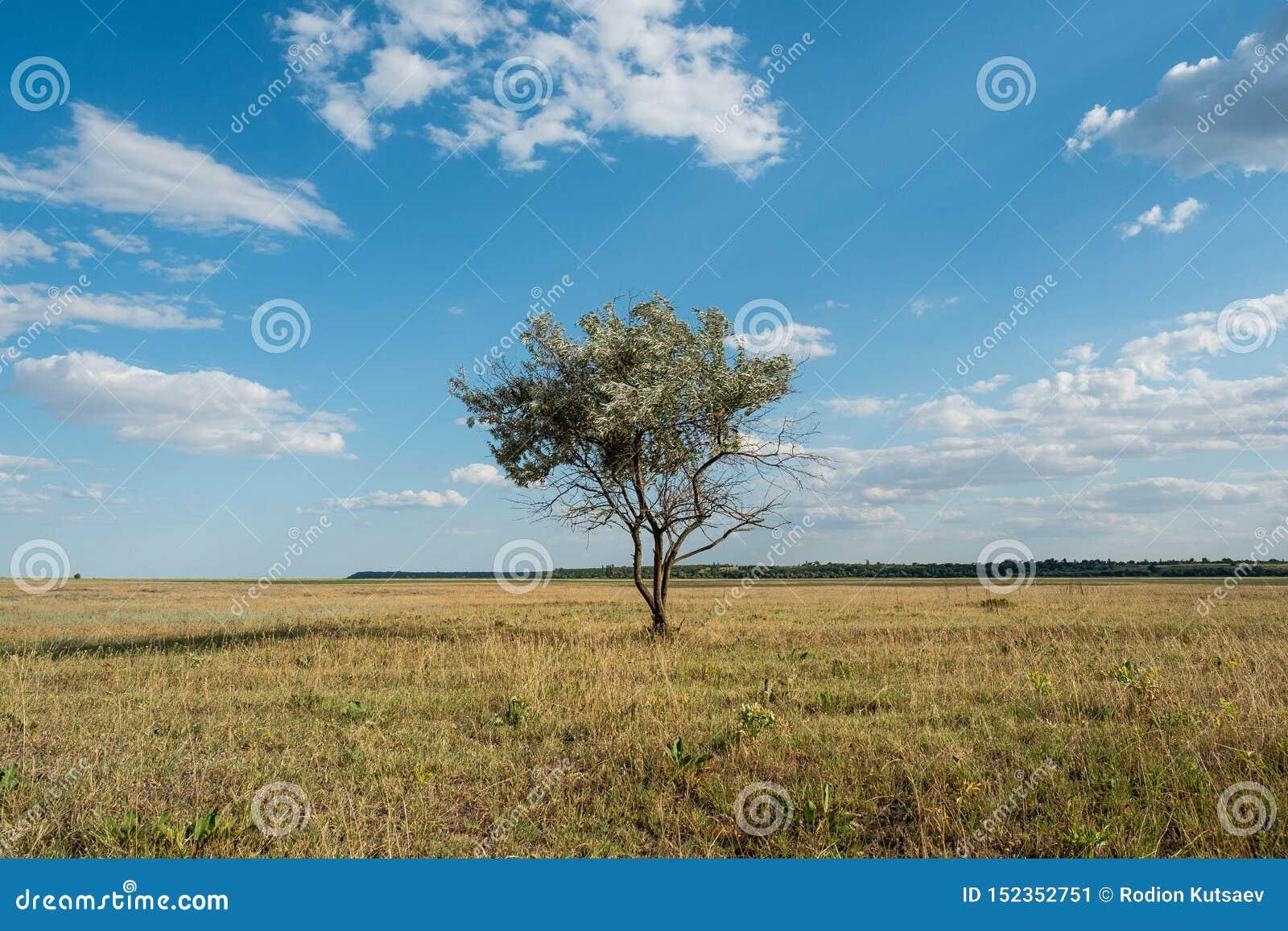 Single tree in summer green grass field landscape clouds blue sky