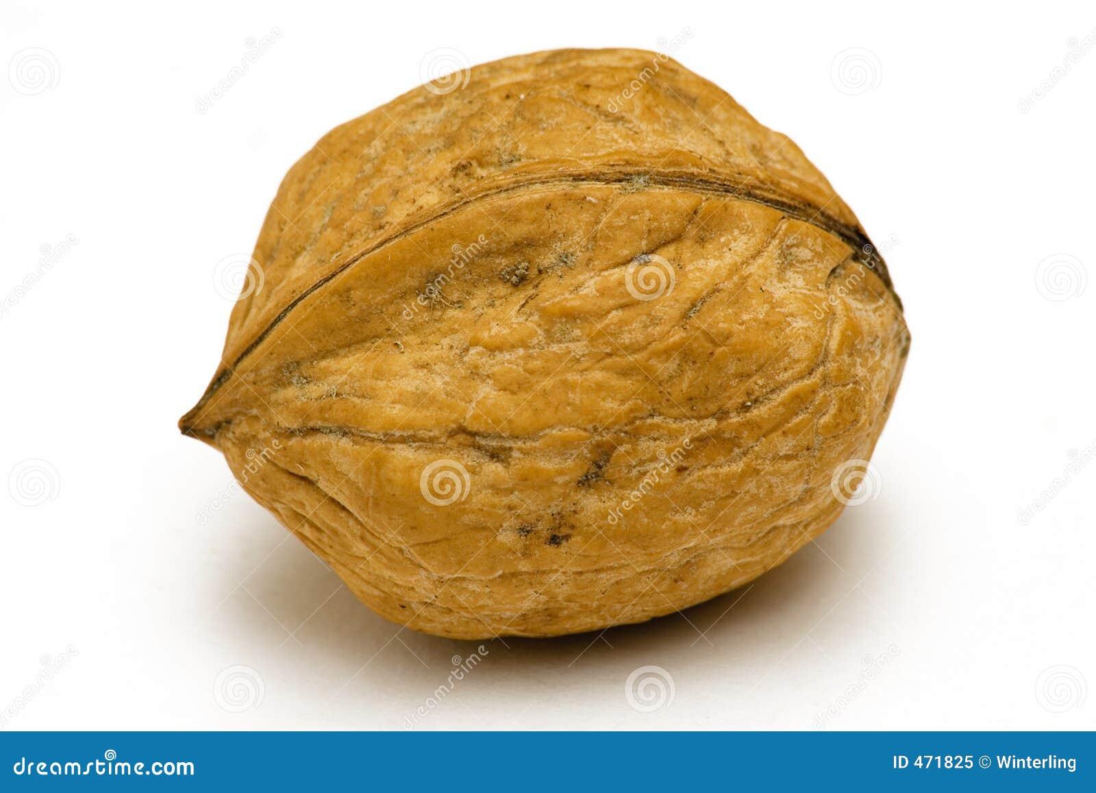 Download Single Walnut stock image. Image of close, nature, nutshell - 471825