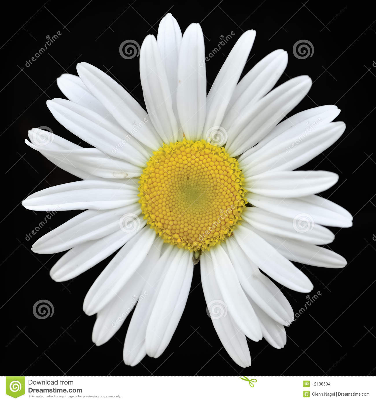 single white daisy stock images  image, Beautiful flower