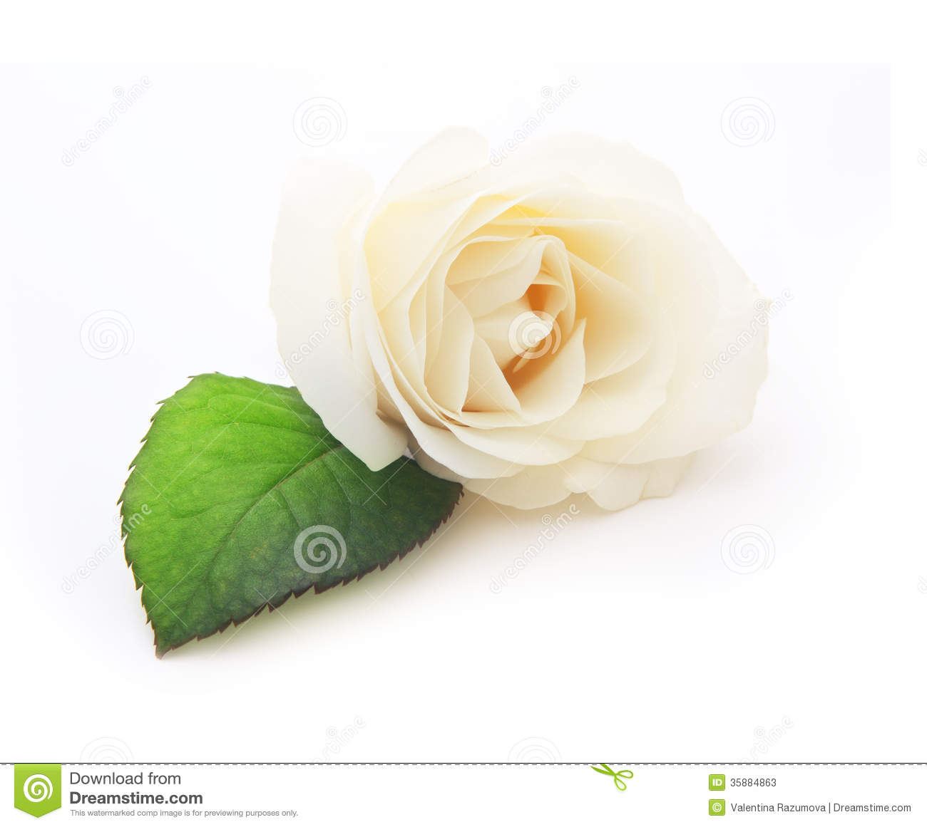 White flower with single leaf stock photo image of color single single white rose flower with leaf stock photos mightylinksfo
