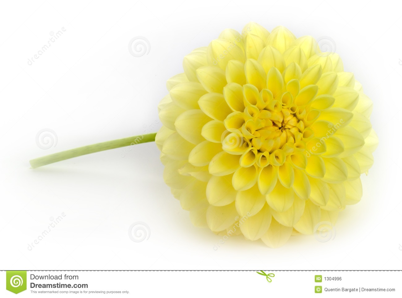 Single yellow dahlia flower stock photo image of flower sphere single yellow dahlia flower izmirmasajfo