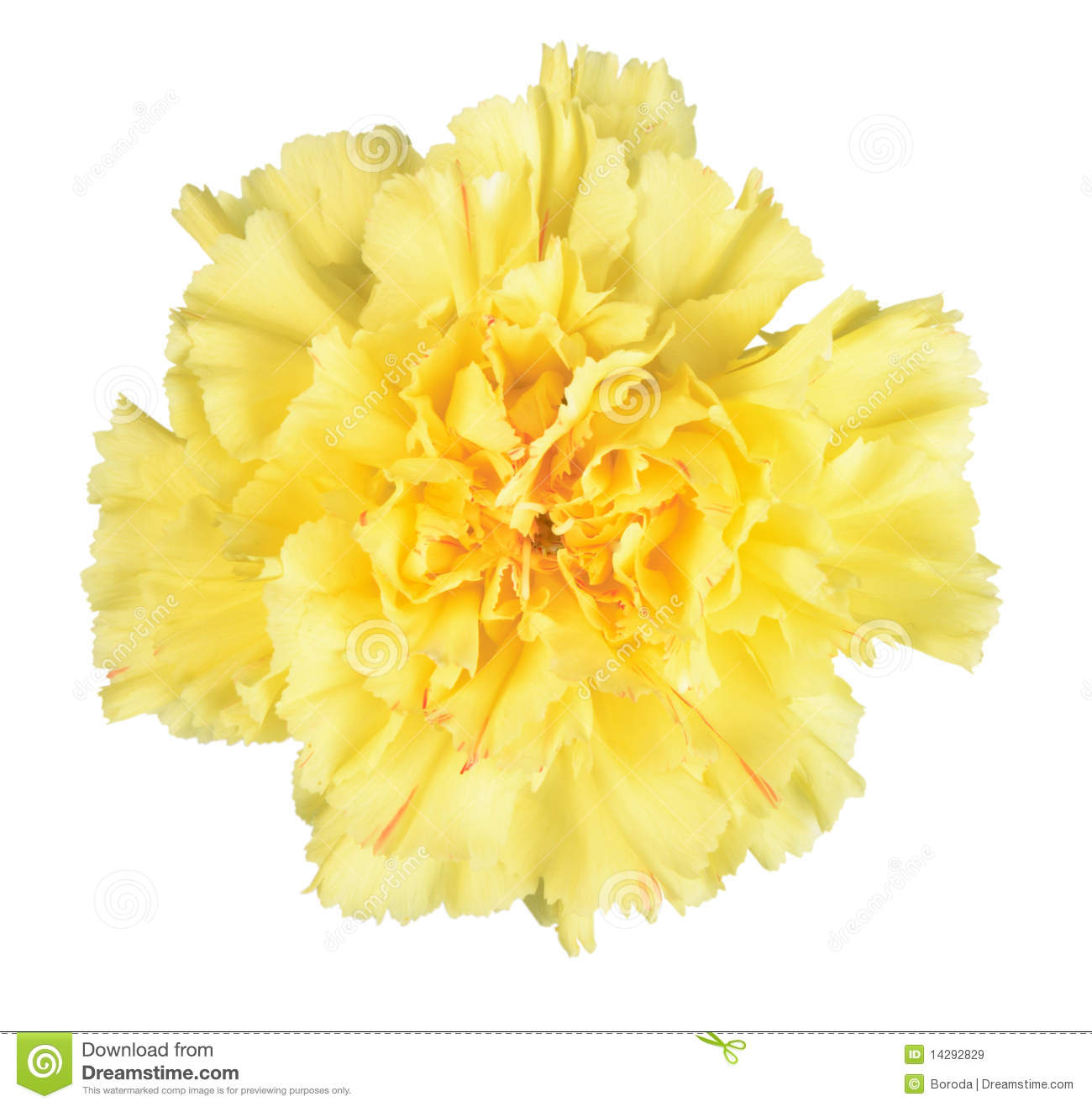 Single yellow flower stock image. Image of studio, nature ...