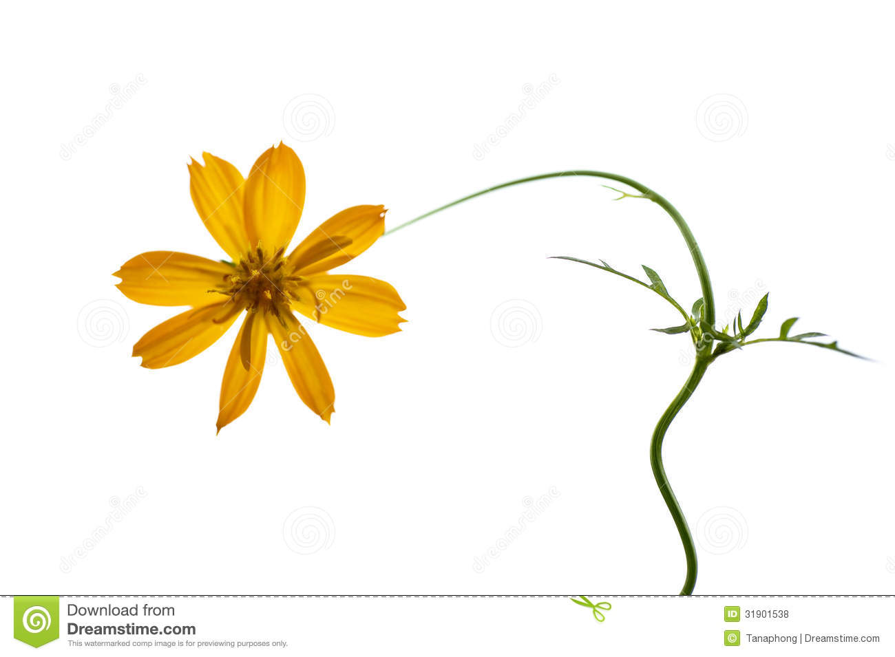 One Flower Clipart Single yellow flower Royalty