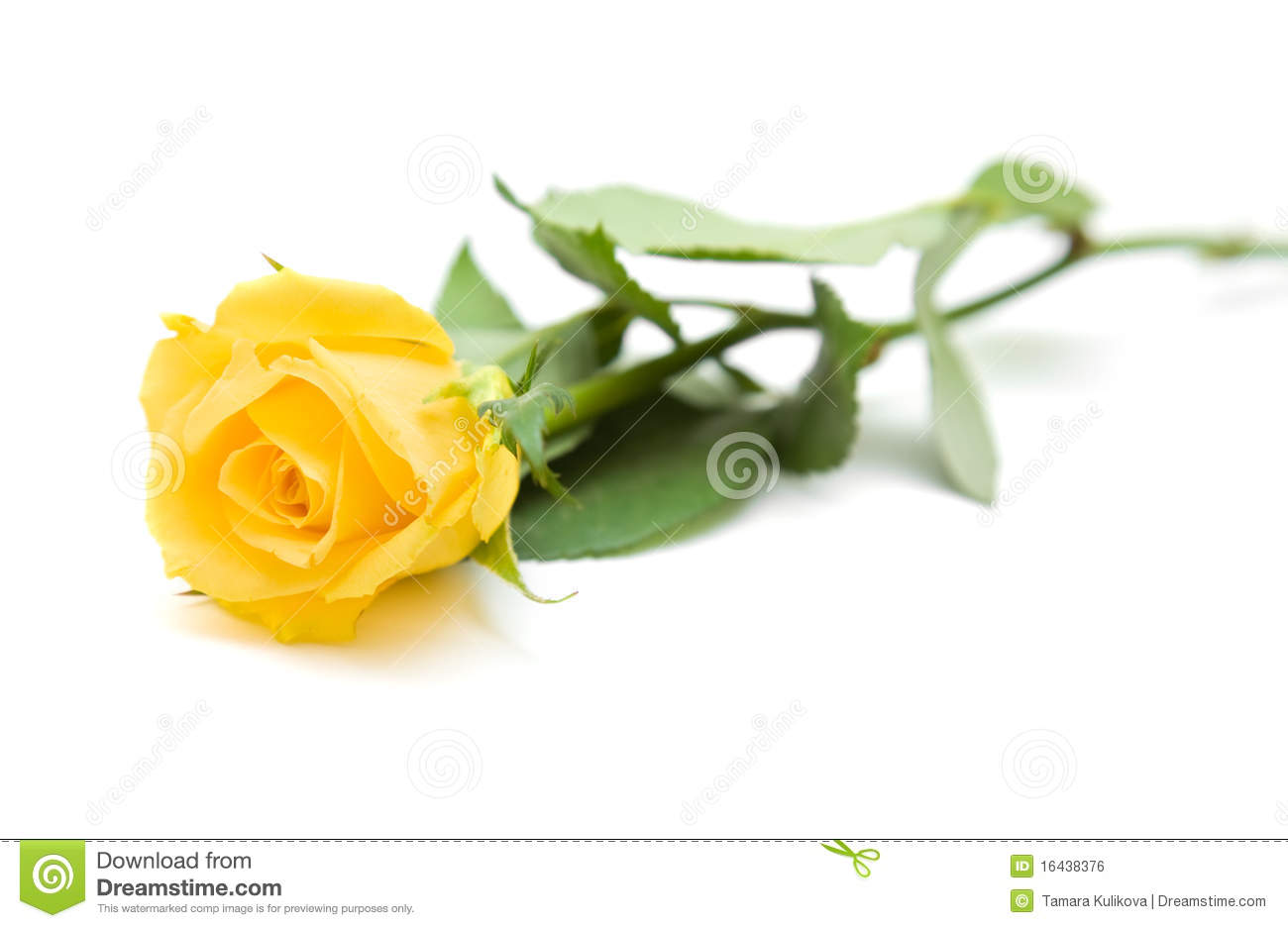 Single Yellow Rose Royalty Free Stock Image - Image: 16438376