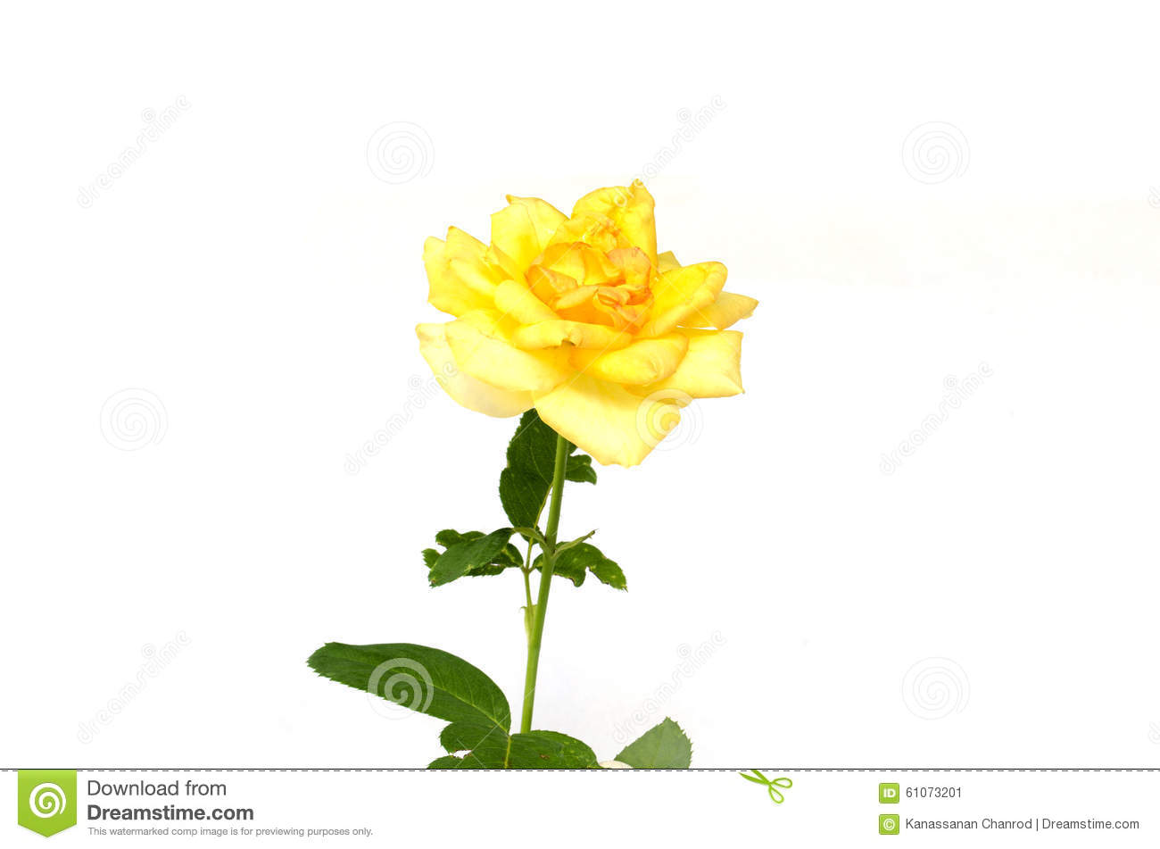 Single Yellow Rose And Leaves Stock Image Image Of Background