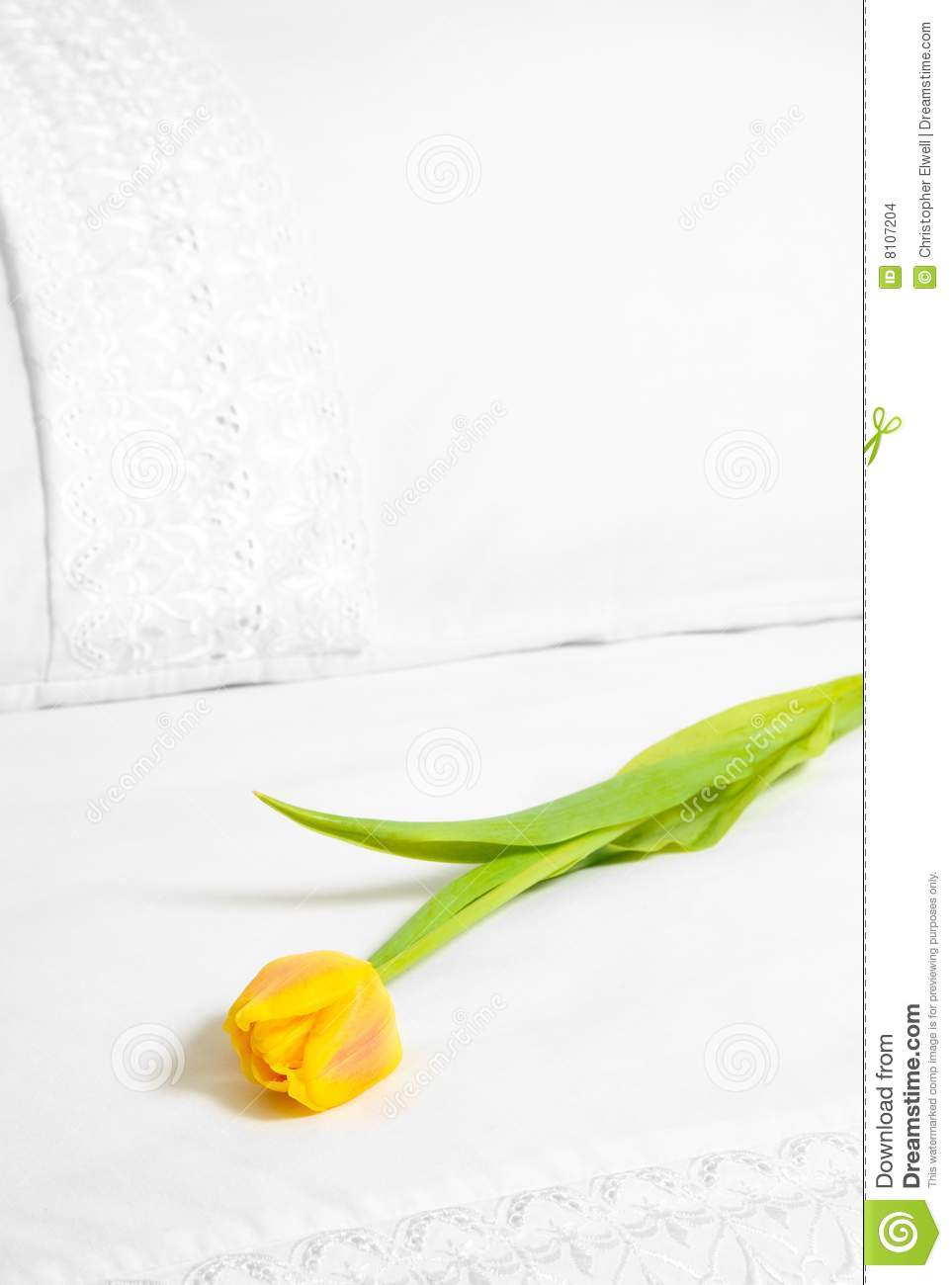 Single Yellow Tulip Stock Images - Image: 8107204