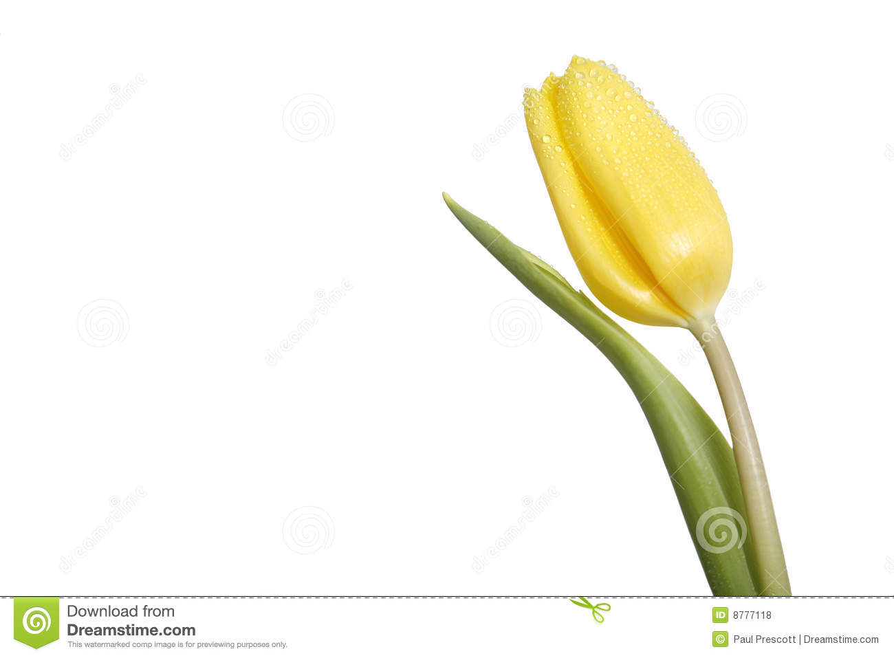 Single Yellow Tulip Royalty Free Stock Photos - Image: 8777118