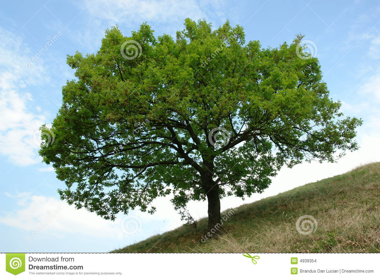 List of oldest trees