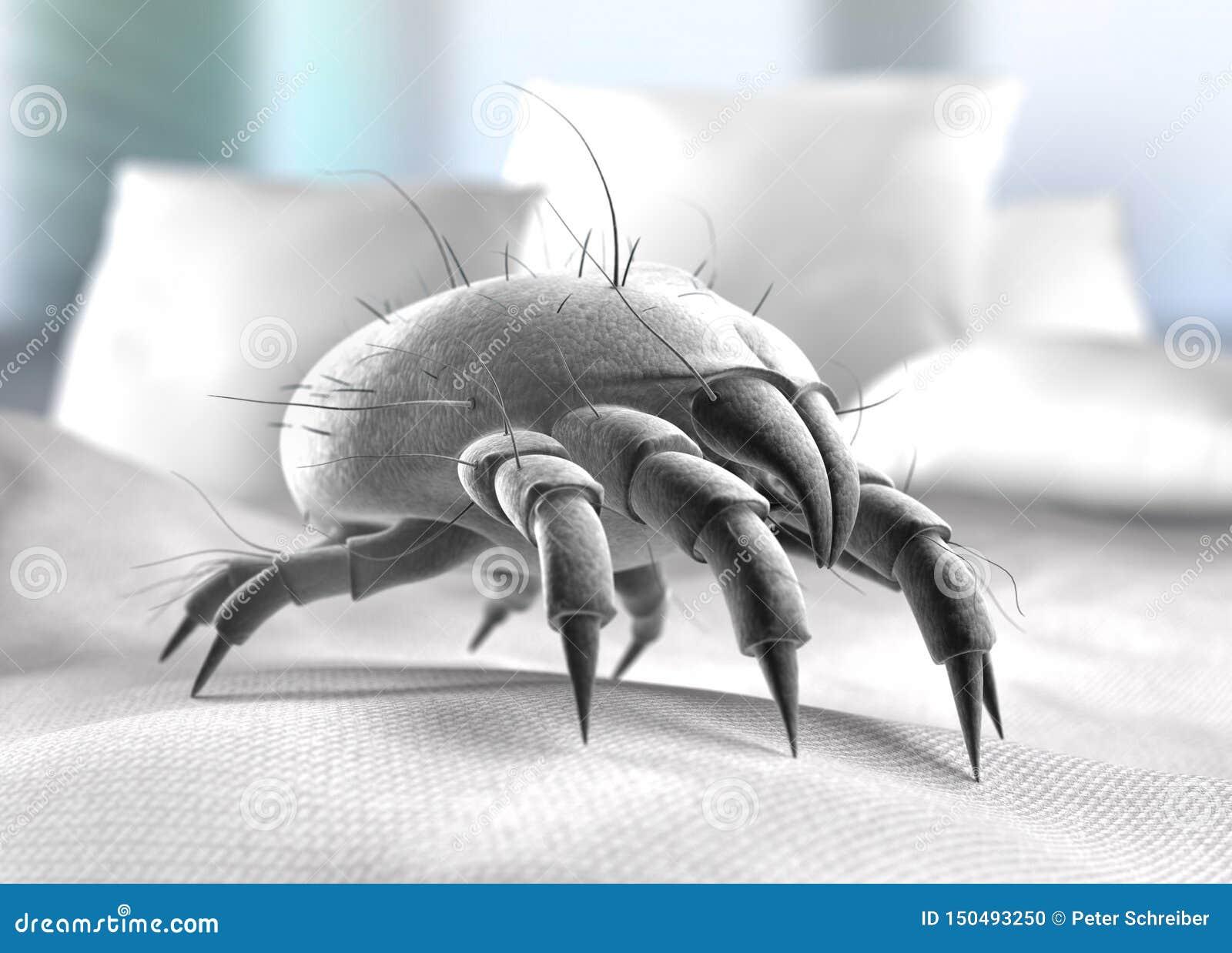 Acari Da Letto singolo acaro della polvere su una superficie del letto