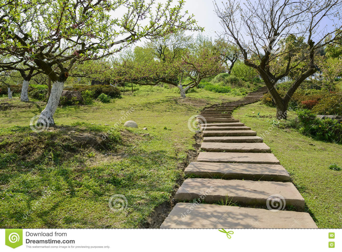 Sinuous hillside flagstone path in spring orchard at sunny noon