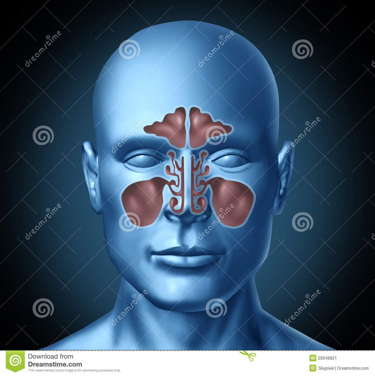 Sinus Human Nasal Cavity With Human Head Stock Illustration