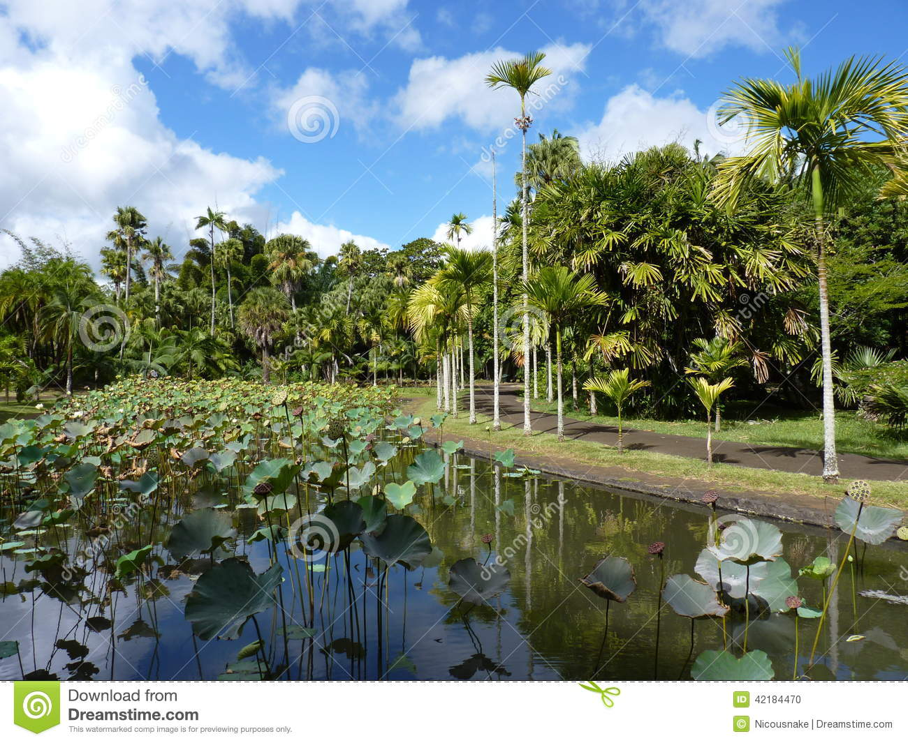 Sir seewoosagur ramgoolam botanical garden stock photo for Gardening tools mauritius