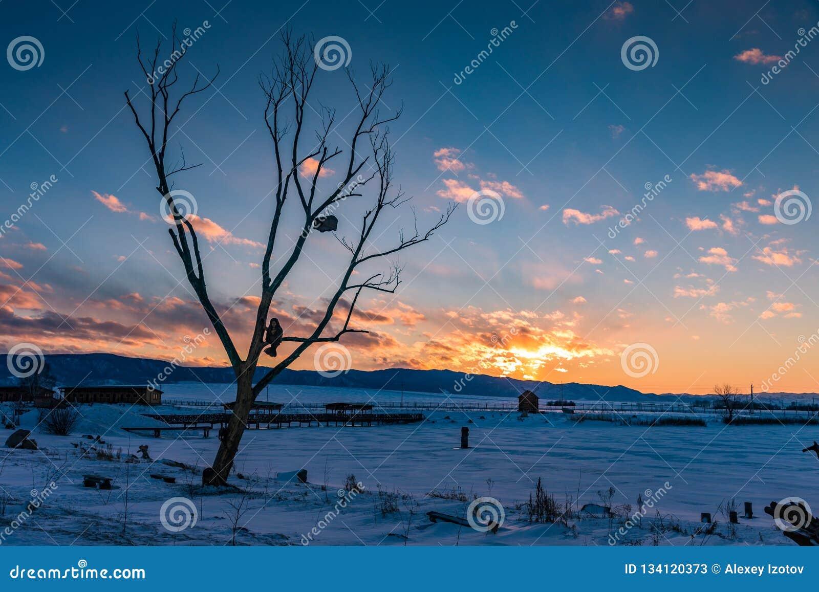 Sirena che si siede su un albero in cui un petto appende e un gatto li custodice nell inverno al tramonto, Altai, Russia di favol