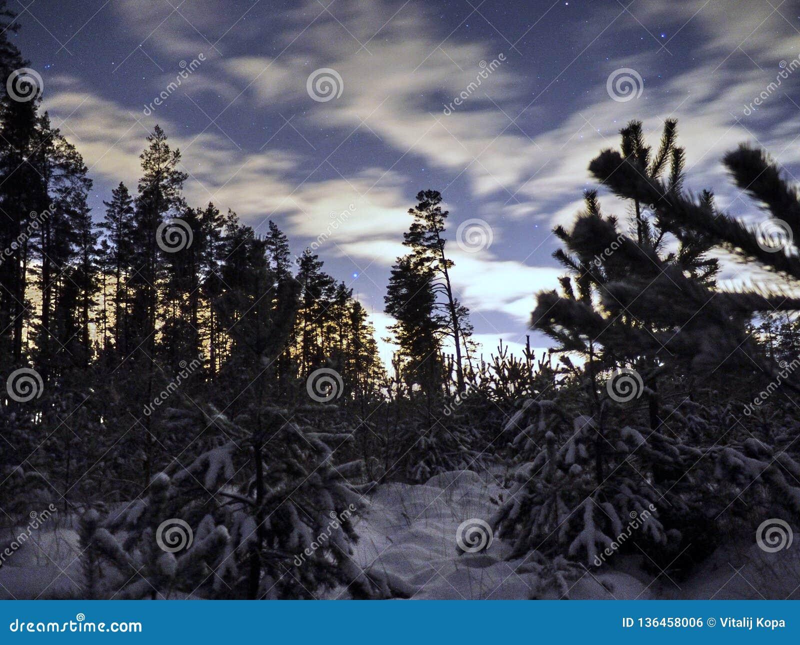 Sirius-Stern auf nächtlichem Himmel und Schnee im Winterwald