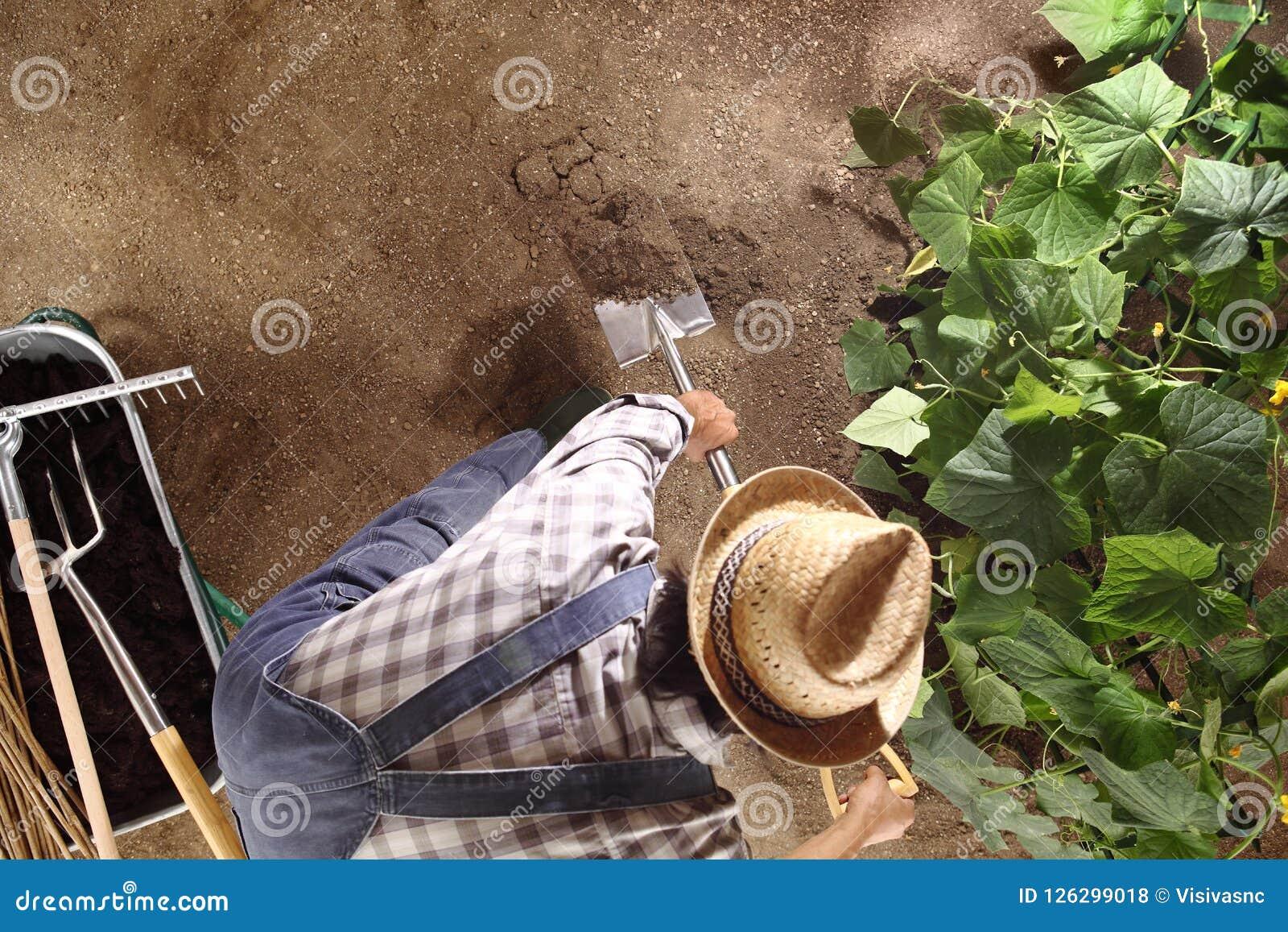 Sirva al granjero que trabaja con la espada en huerto, rómpase para arriba y