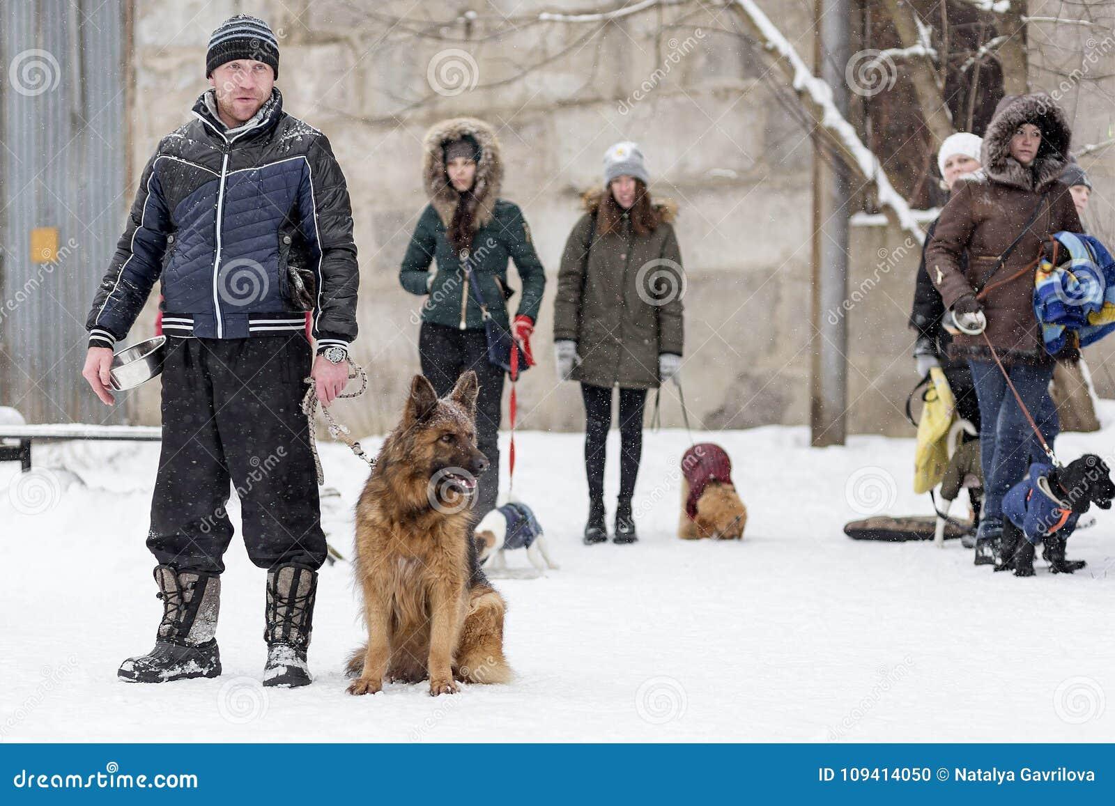 Sirva caminar con el pastor alemán, invierno, editorial