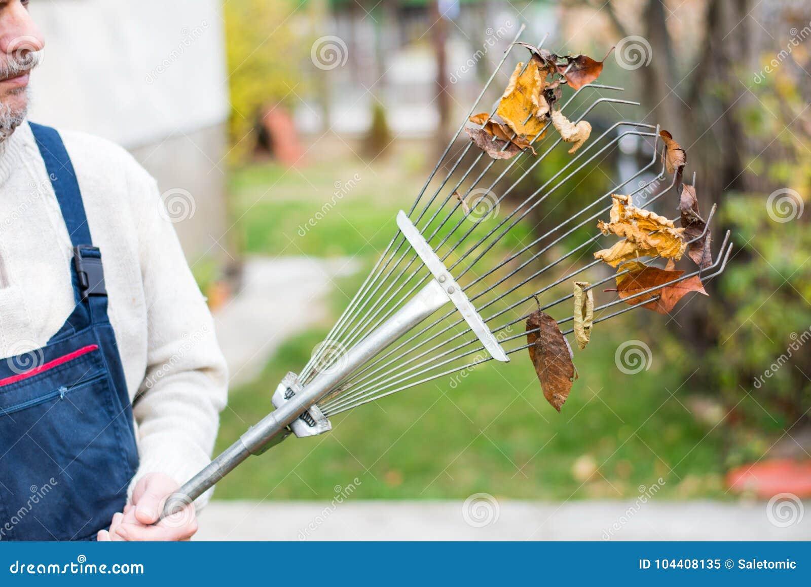 Sirva sostener el rastrillo con las hojas de otoño en la yarda