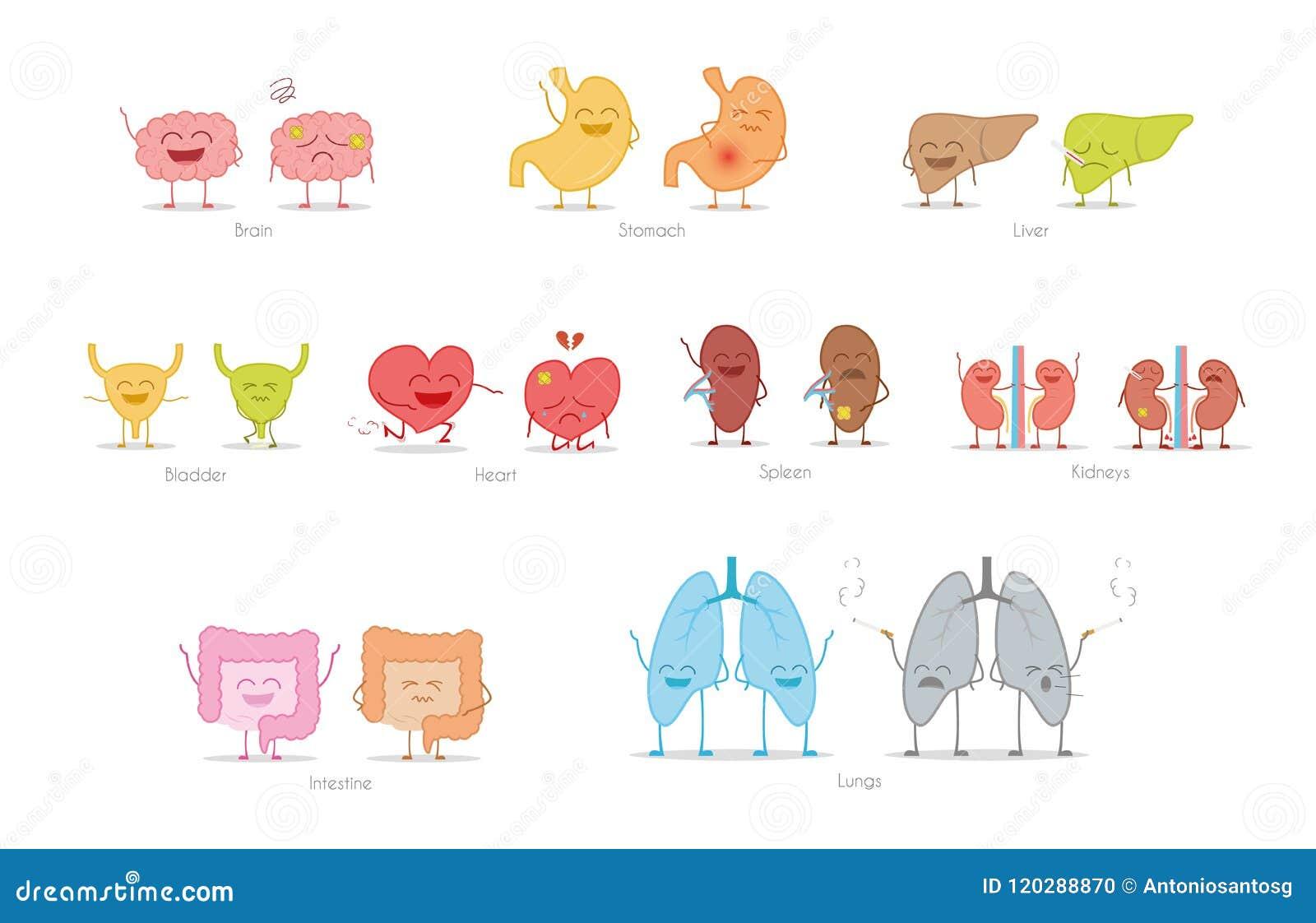 Sistema De órganos Humanos Sanos Y Enfermos En Estilo De La ...