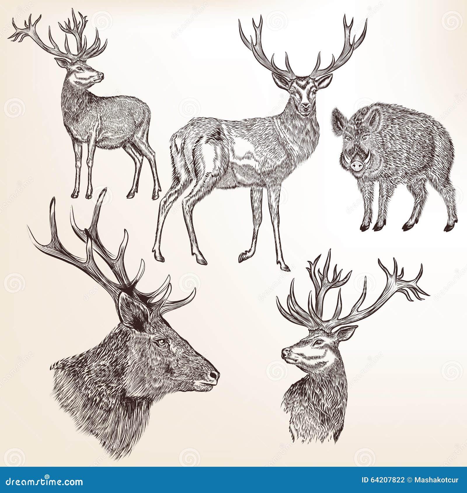 Sistema de animales dibujados mano detallada