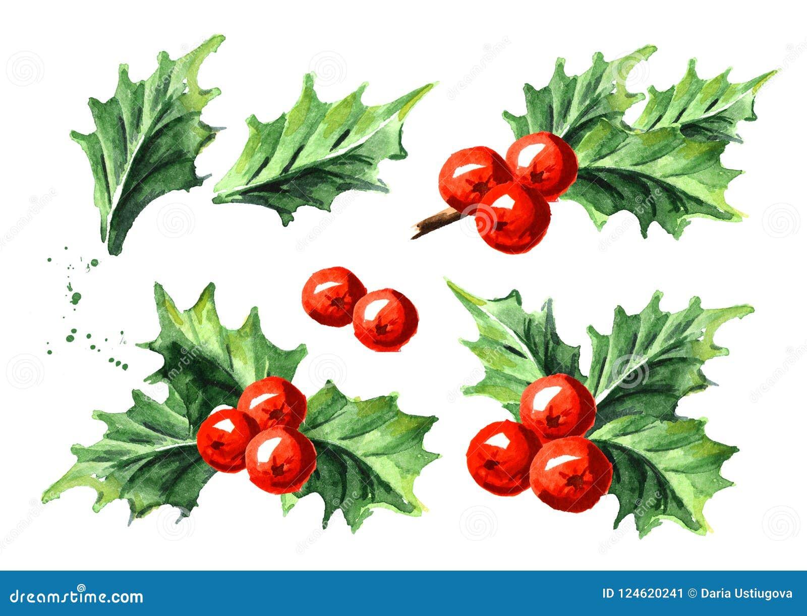 Sistema de baya decorativo del acebo del símbolo de la Navidad y del Año Nuevo Ejemplo dibujado mano de la acuarela, aislado en e
