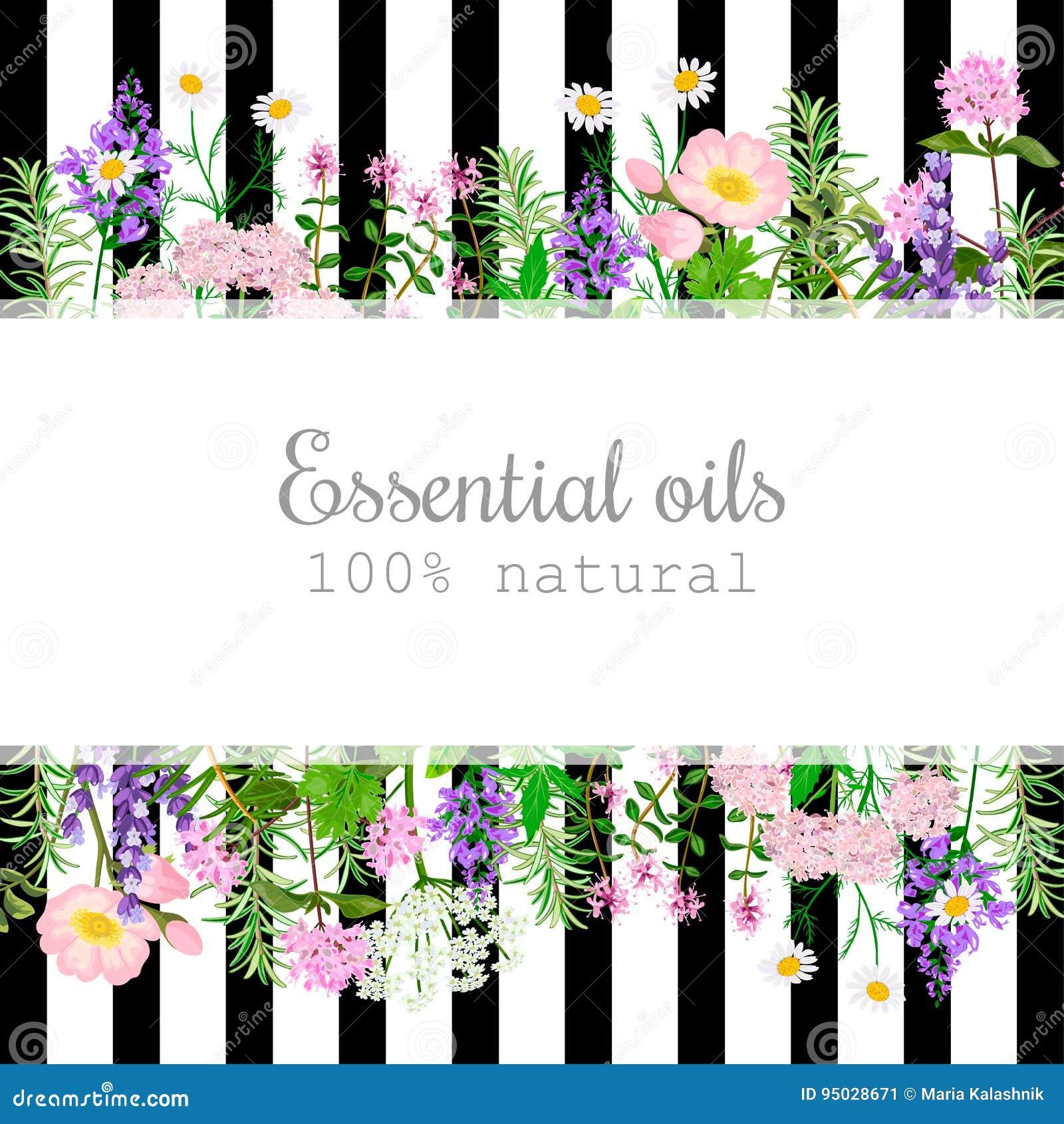 Sistema de etiqueta popular de las plantas de aceite esencial en rayas negras