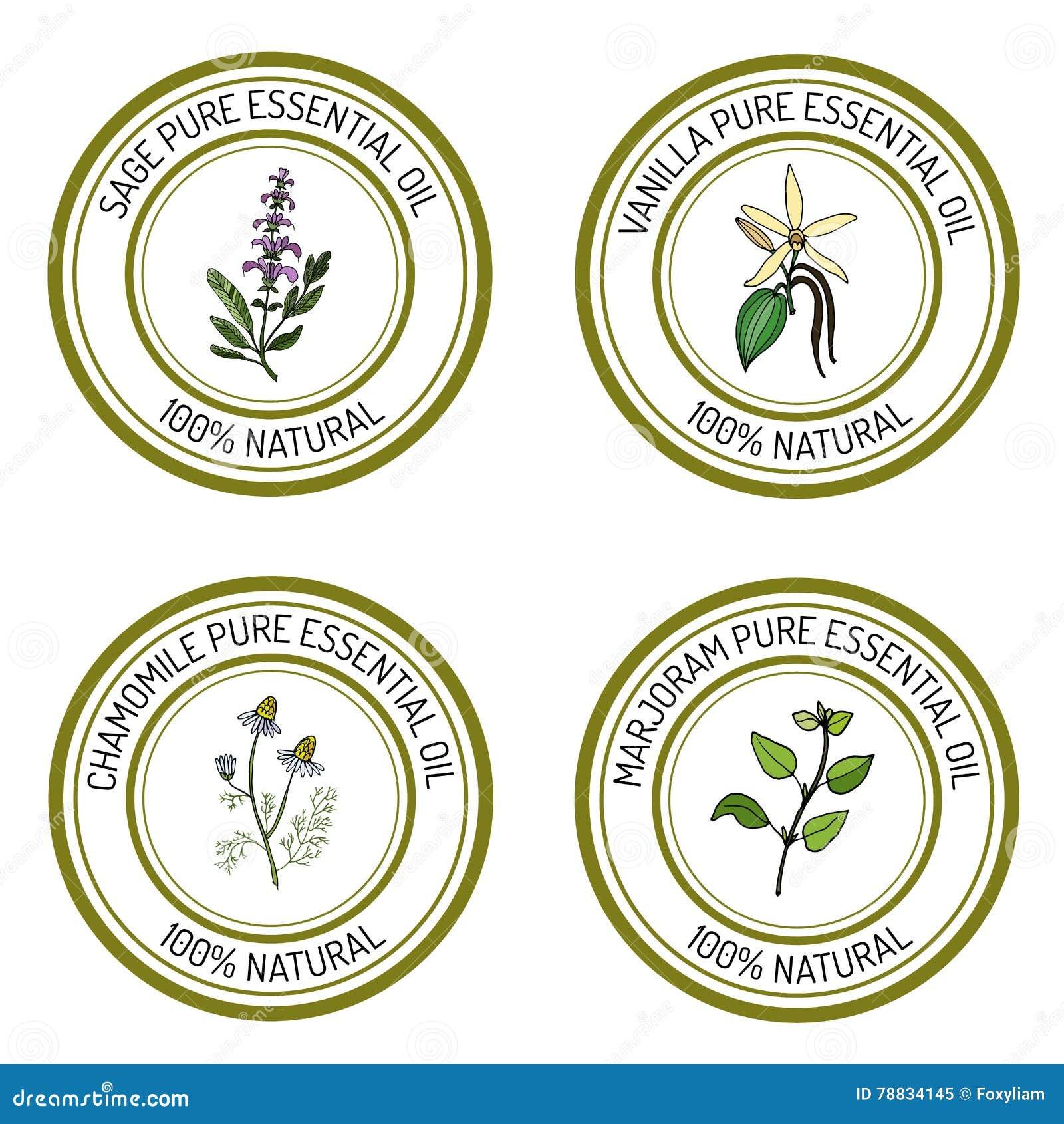 Sistema de etiquetas del aceite esencial: sabio, vainilla, manzanilla, mejorana