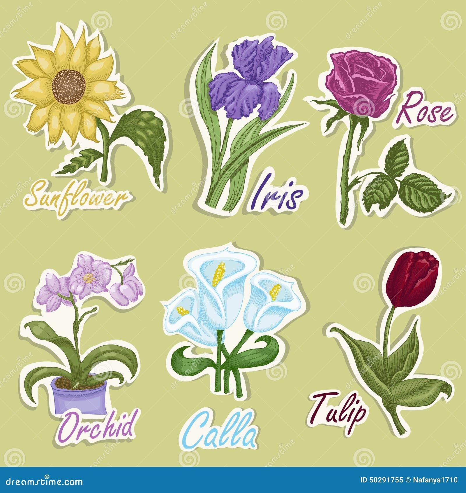 Sistema De Etiquetas Del Color Con Las Flores Ejemplos Del Dibujo De