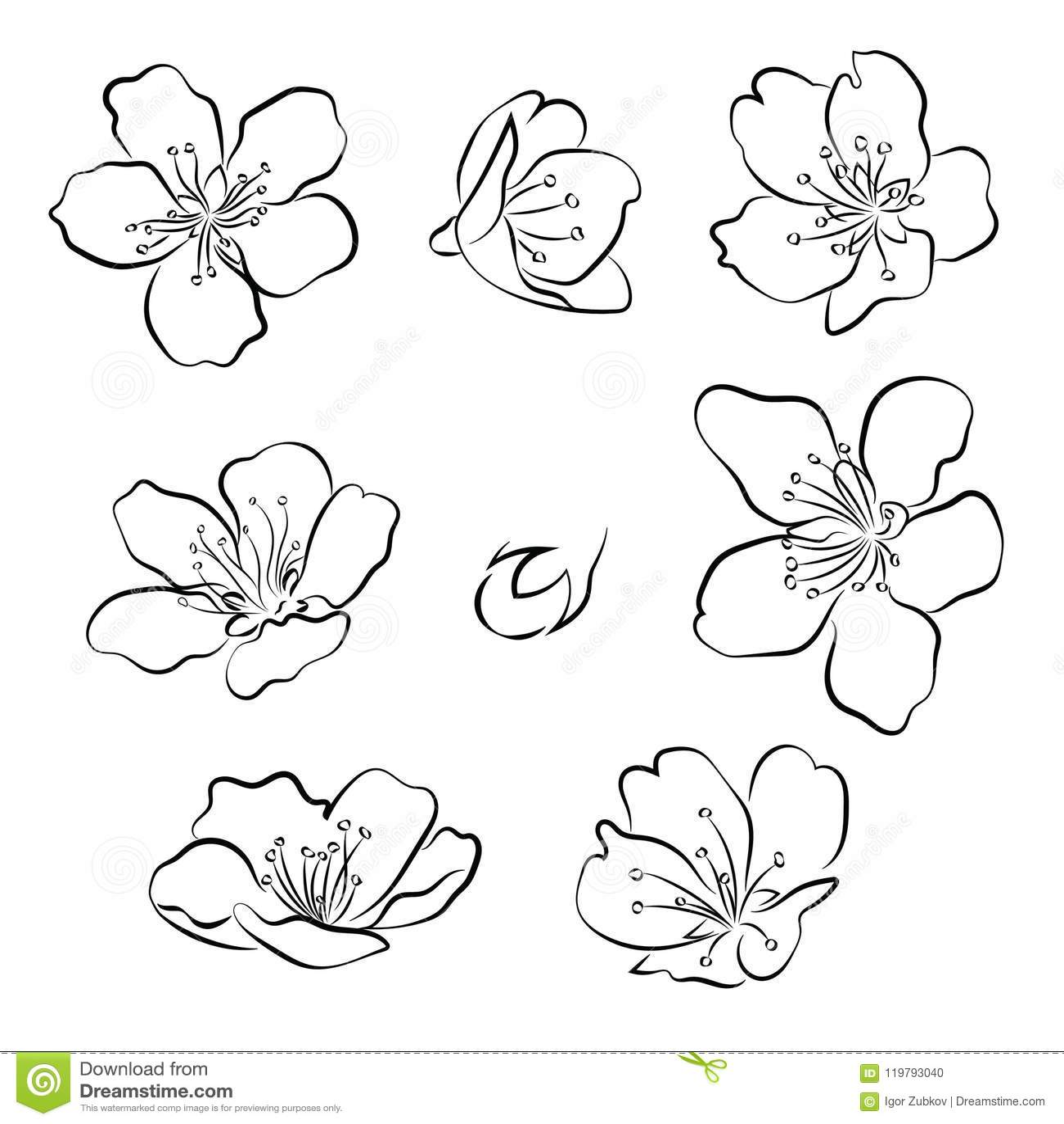 Sistema De Flores De Cerezo Colección De Flores De Sakura Dibujo