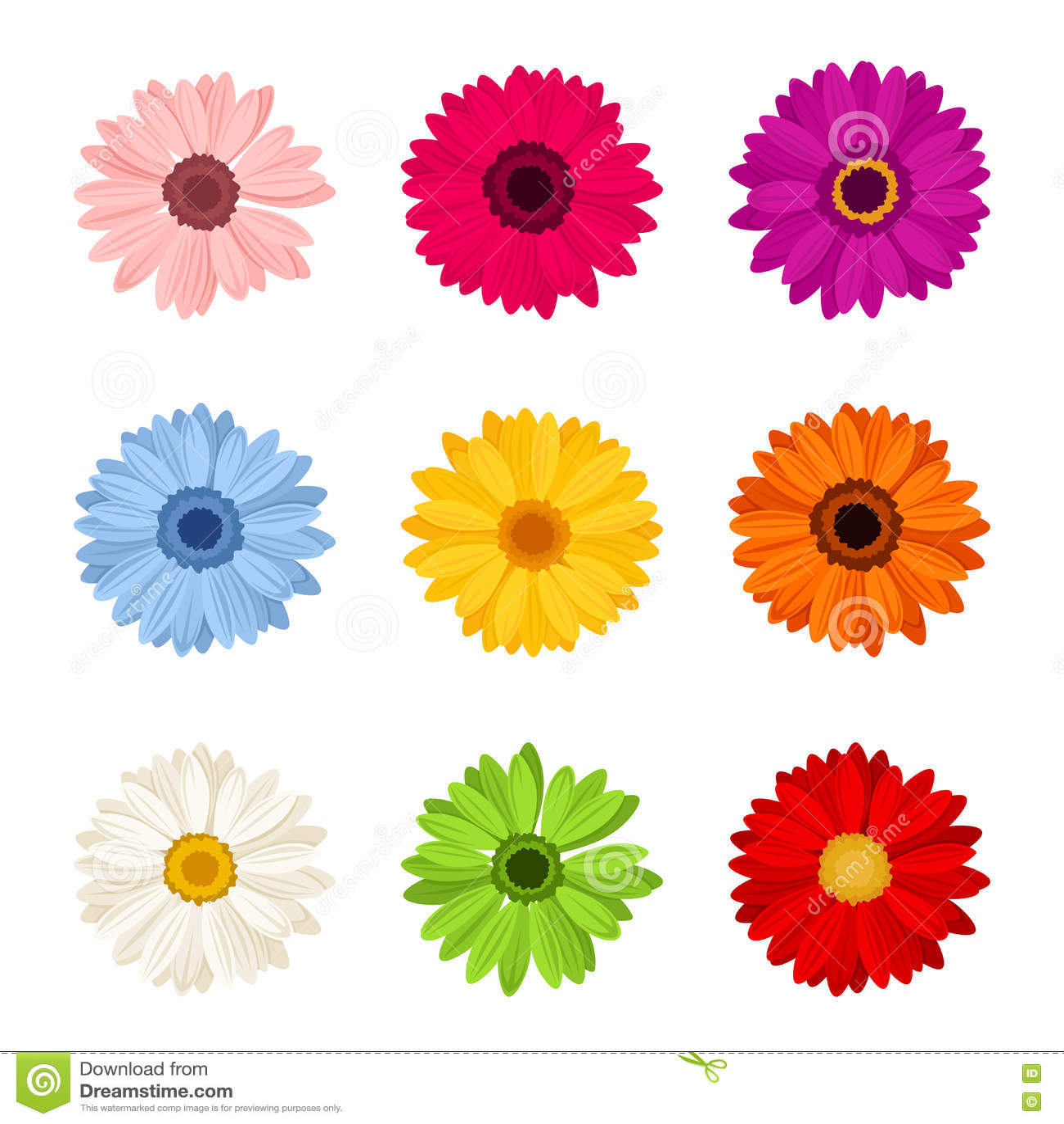 Sistema de flores coloridas del gerbera Ilustración del vector