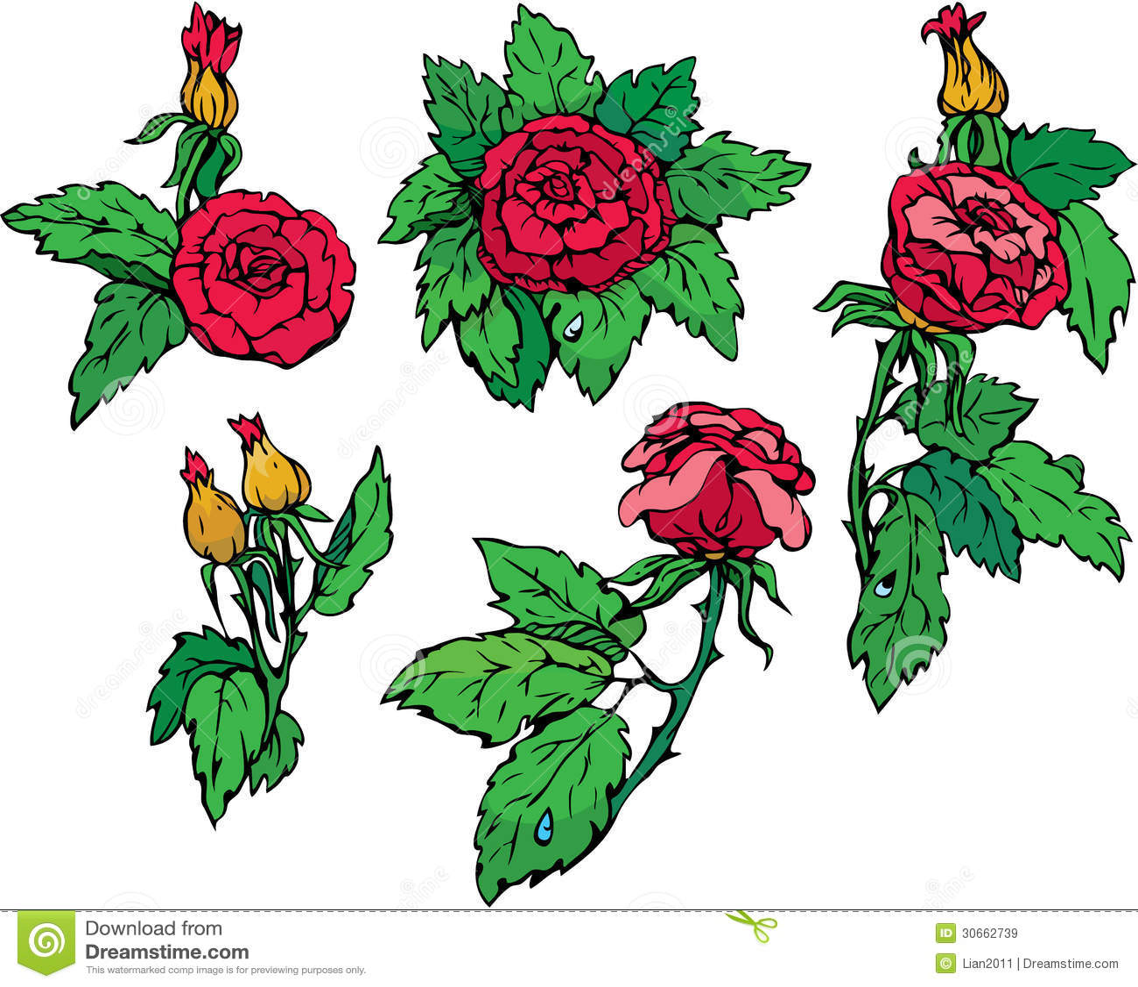 Sistema De Flores Dibujadas Mano Las Rosas 30662739jpg