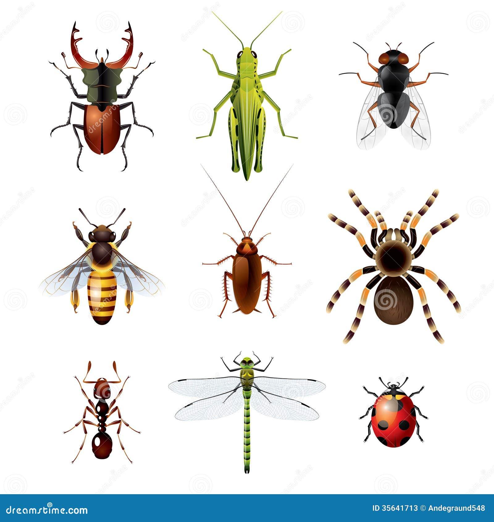 Sistema de insectos en el fondo blanco ilustraci n del vector ilustraci n de conjunto aislado - Fotos de insectos para imprimir ...