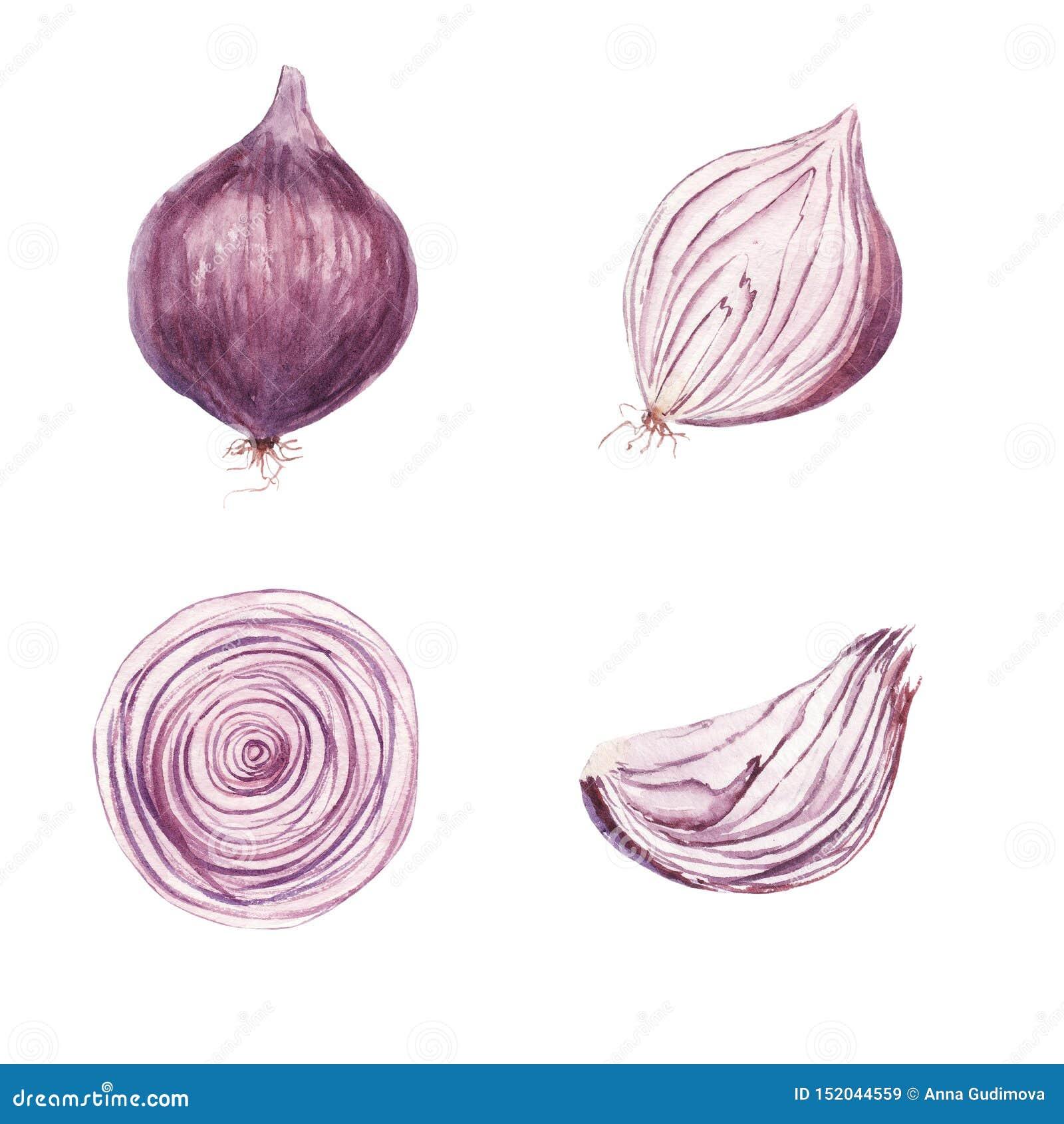 Sistema de la acuarela de la verdura dulce de la cebolla aislada en el fondo blanco