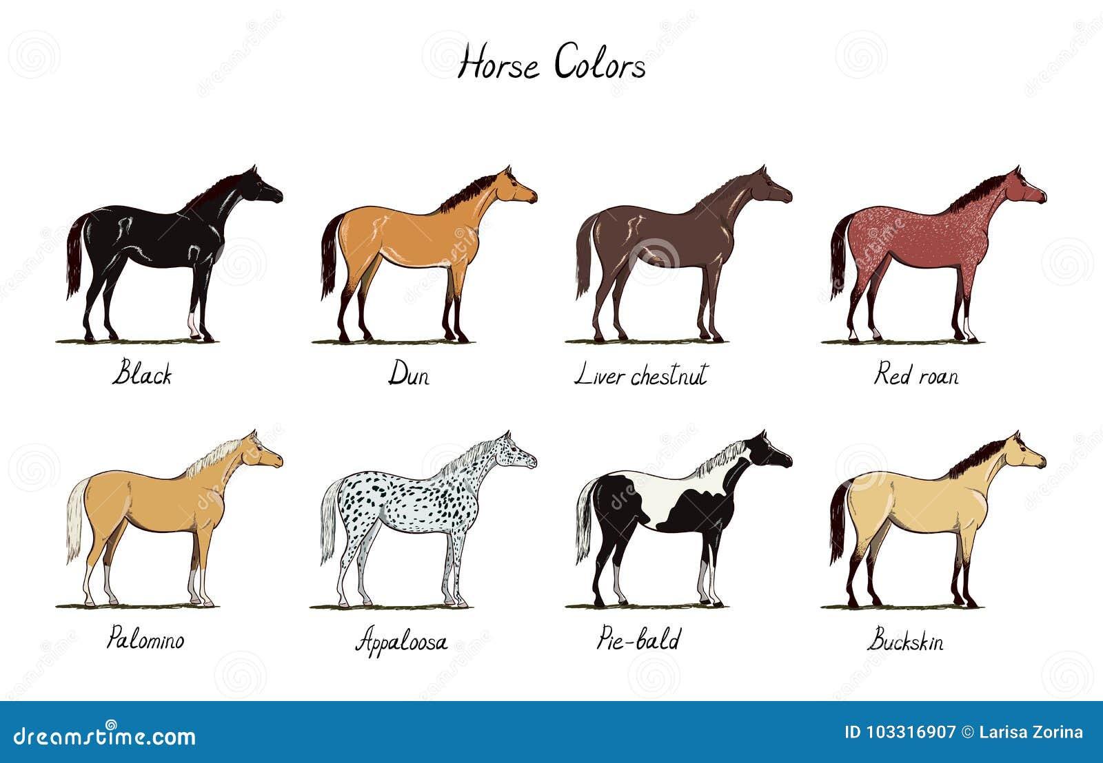 Bonito Color Páginas Caballos Inspiración - Enmarcado Para Colorear ...