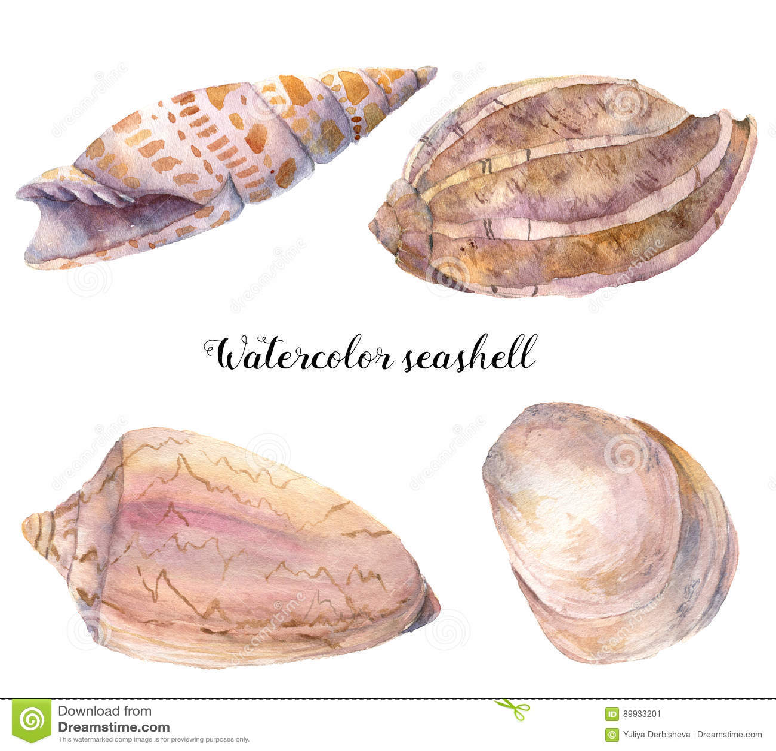 Sistema de la concha marina de la acuarela Ejemplo animal tropical subacuático pintado a mano aislado en el fondo blanco Para el