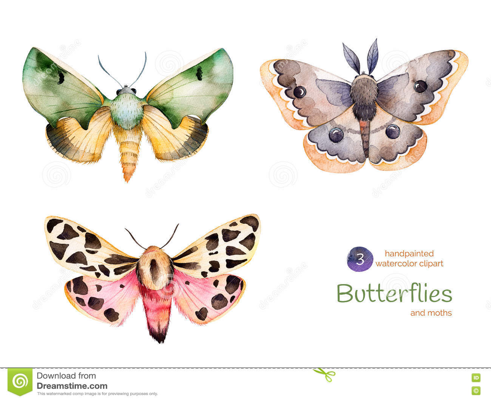 Sistema de las mariposas y de las polillas pintadas a mano de alta calidad de la acuarela