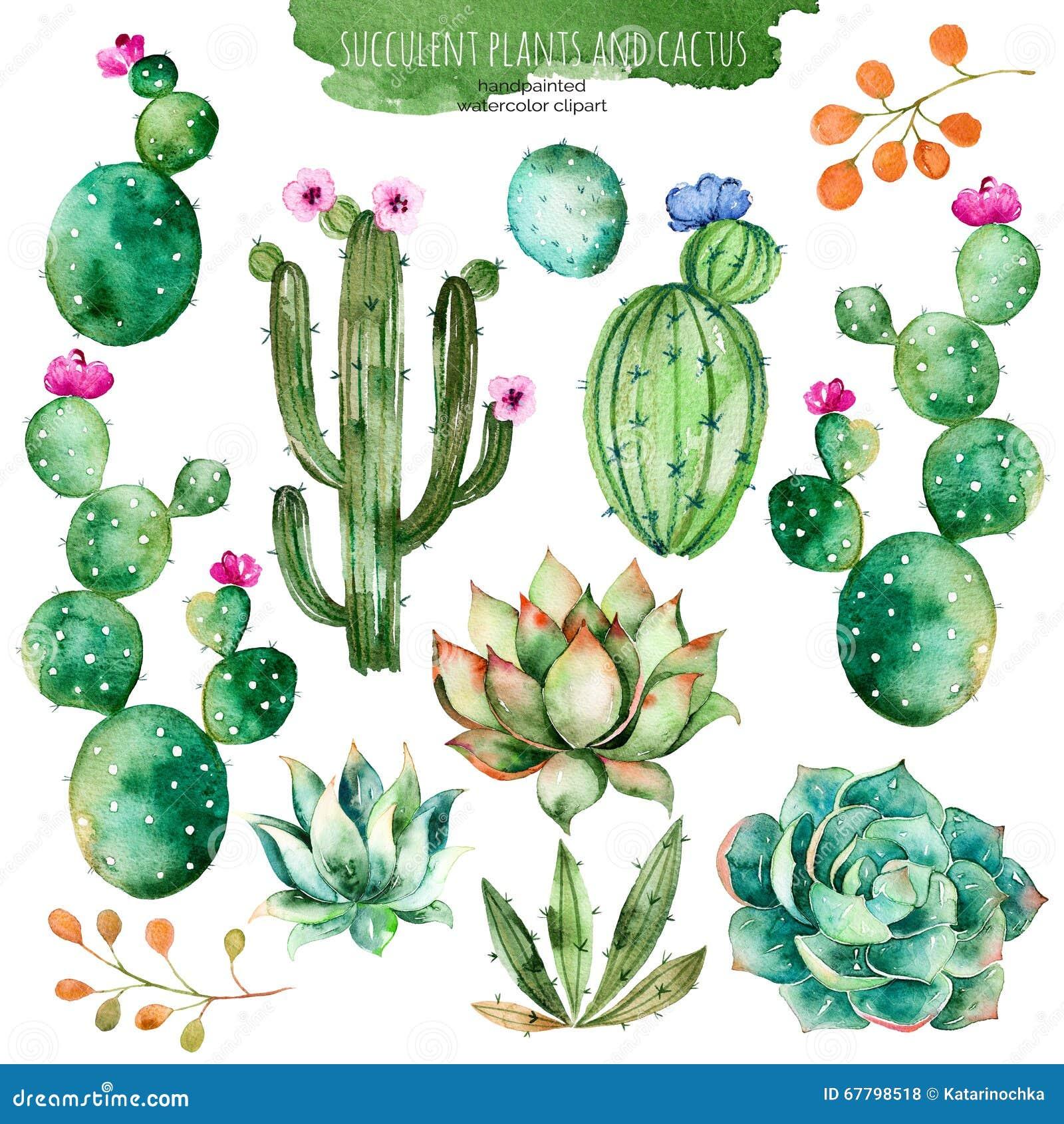 Sistema de los elementos pintados a mano de alta calidad de la acuarela para su diseño con las plantas, el cactus y más suculento