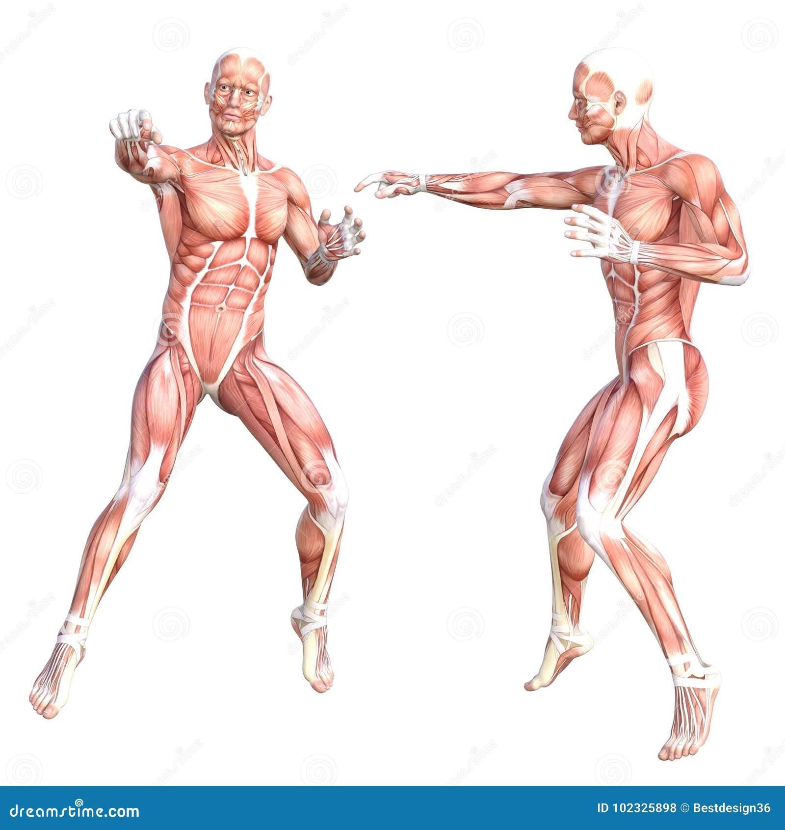 Magnífico Anatomía Del Cuerpo Humano Vídeos De Descarga Gratuita ...
