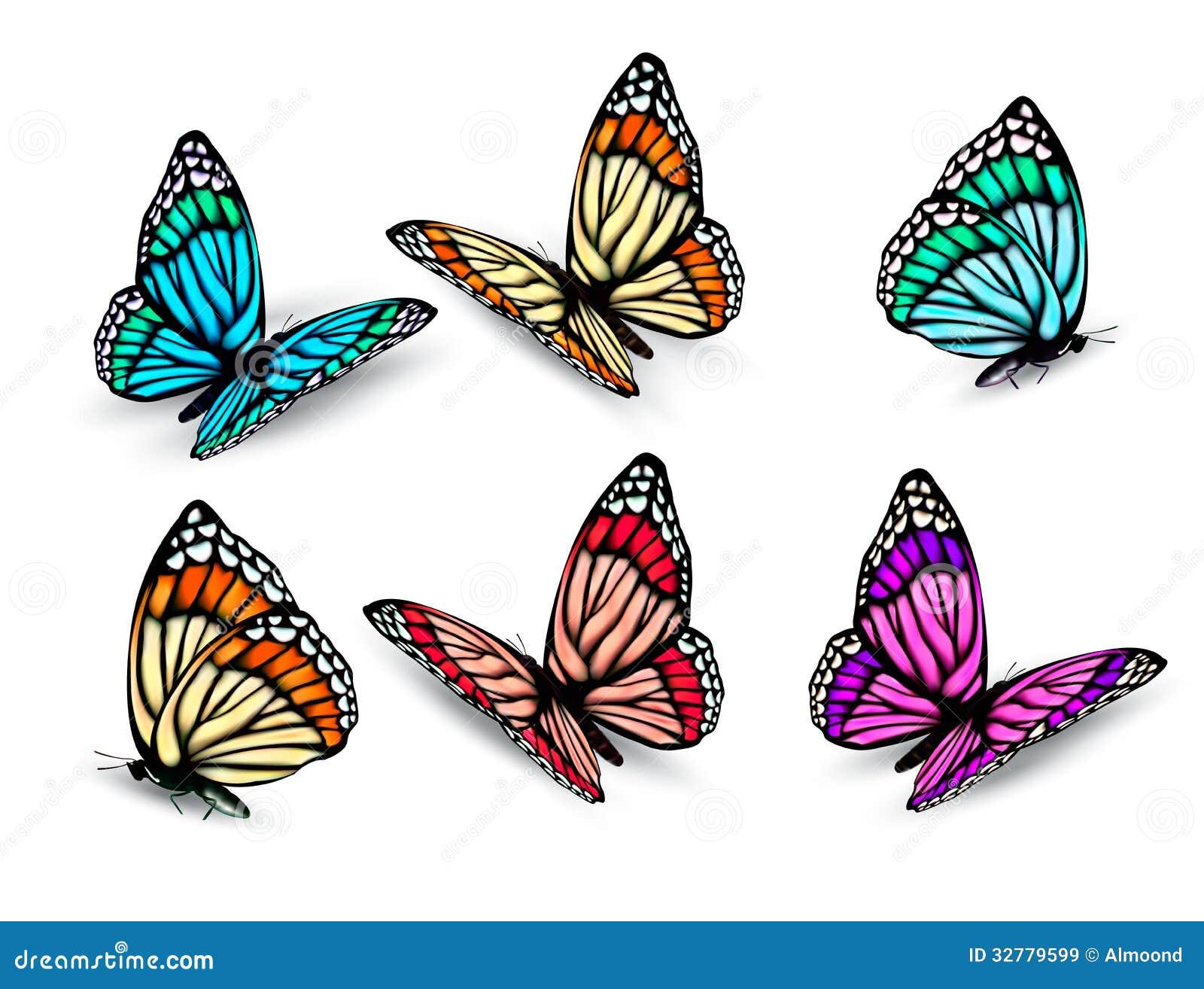 Фото метеликів