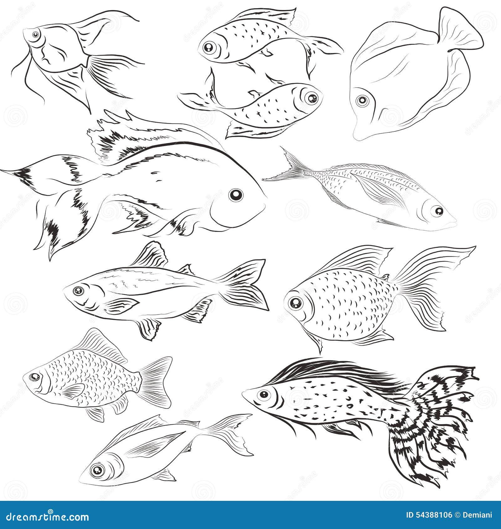 Sistema de pescados de los ejemplos salvaje Océano