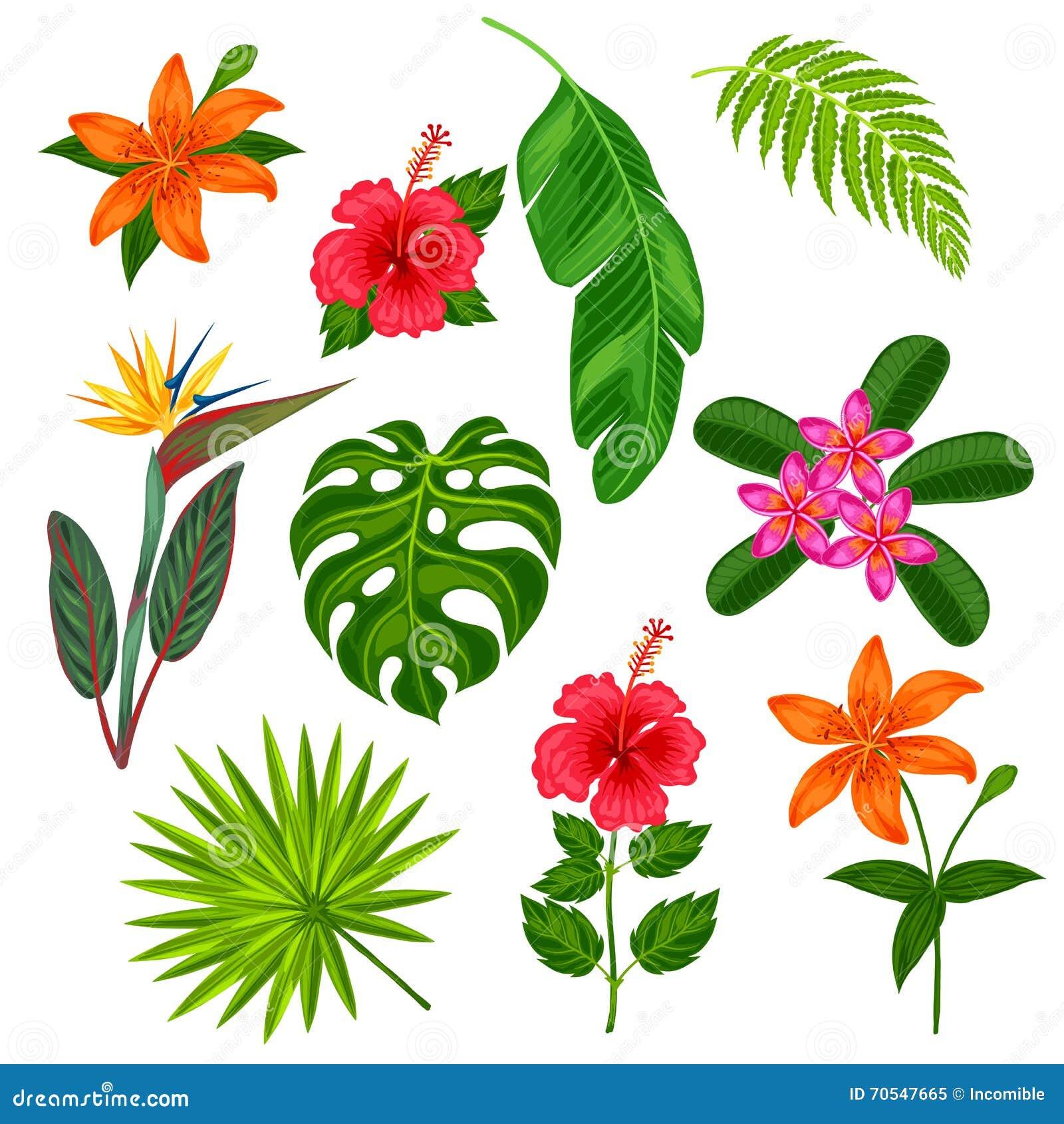 Moderno Diseños De Uñas De Flores Tropicales Elaboración - Ideas ...