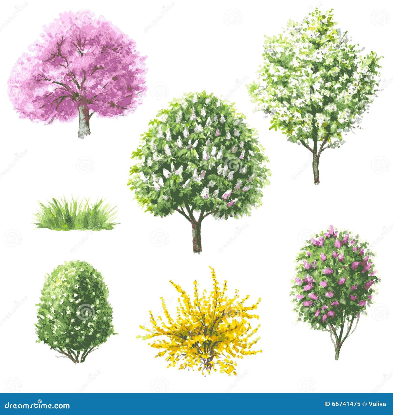 Sistema de rboles y de arbustos florecientes ilustraci n - Arboles y arbustos ...