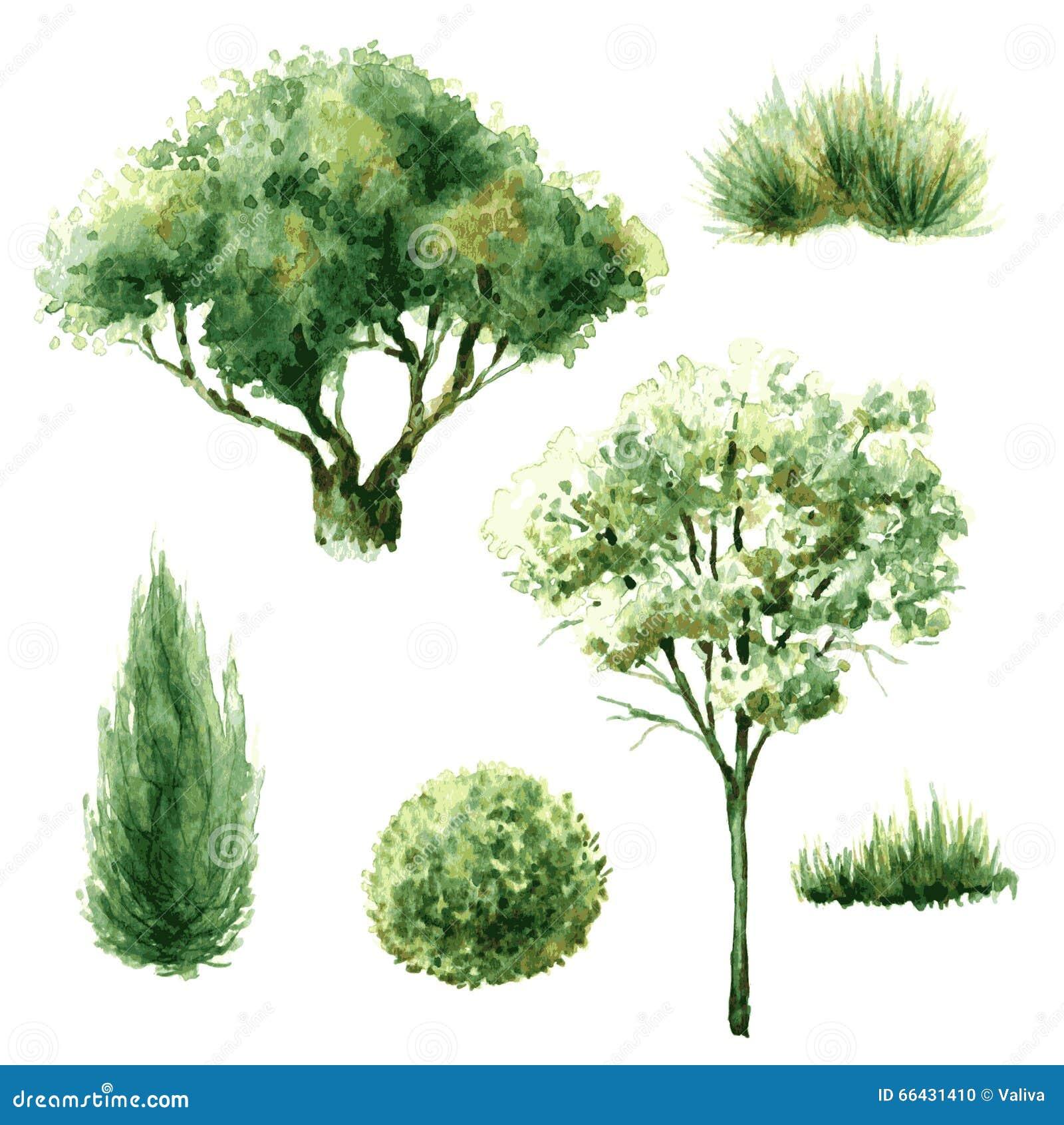 Sistema de rboles y de arbustos verdes ilustraci n del - Arboles y arbustos ...