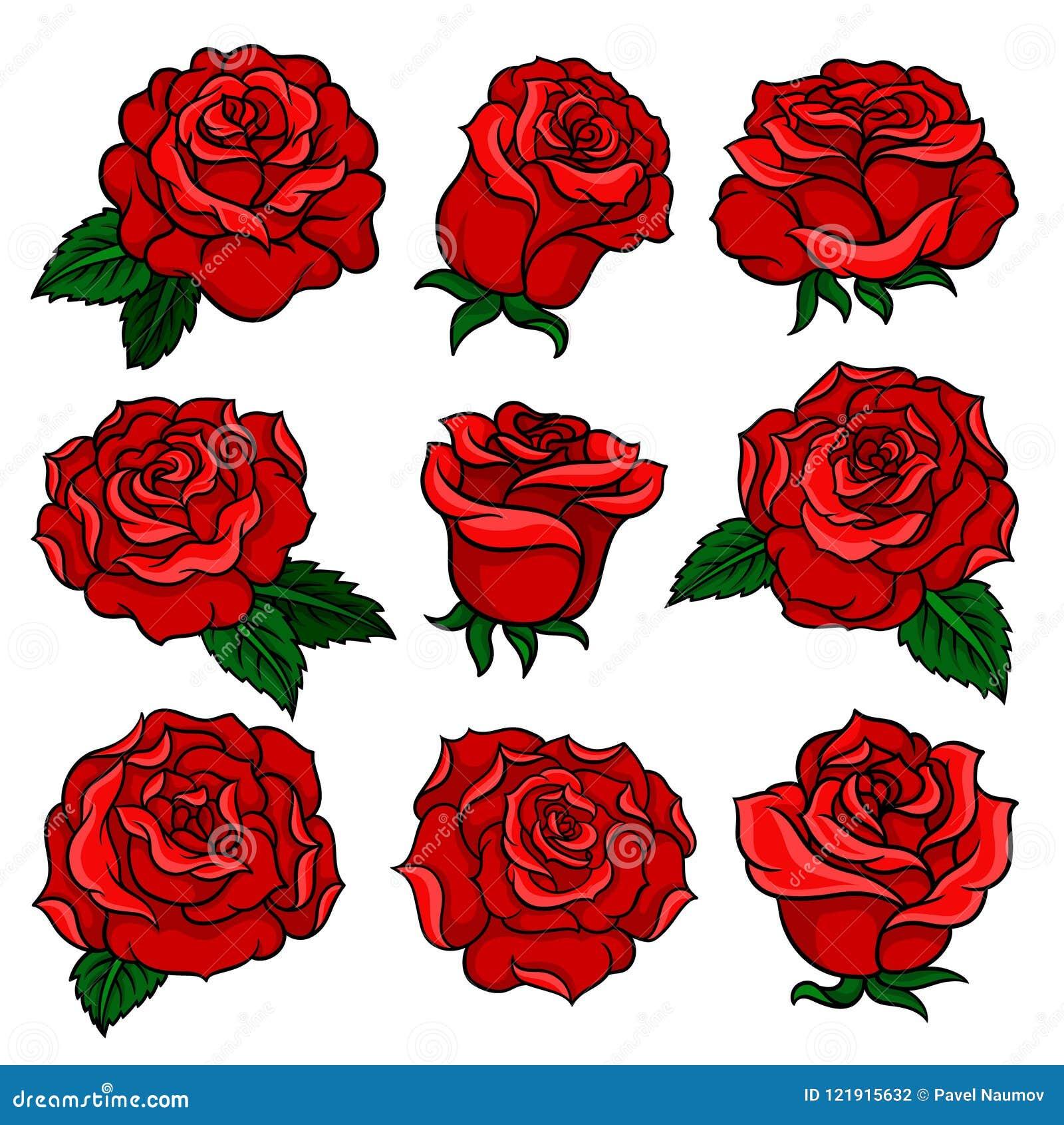 Sistema De Rosas Rojas Magníficas Brote De Las Flores Magníficas Del