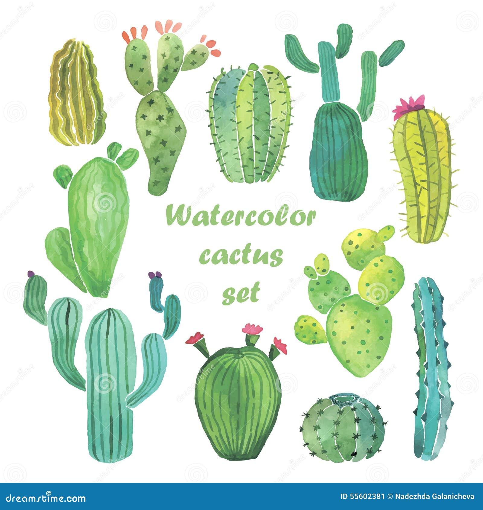 Sistema del cactus de la acuarela