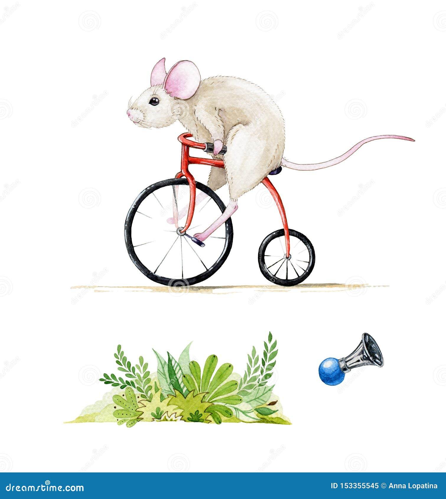 Sistema del ejemplo de la acuarela de un ratón que monta una bici roja El watercolour exhausto de la mano fijó de una rata, aisla