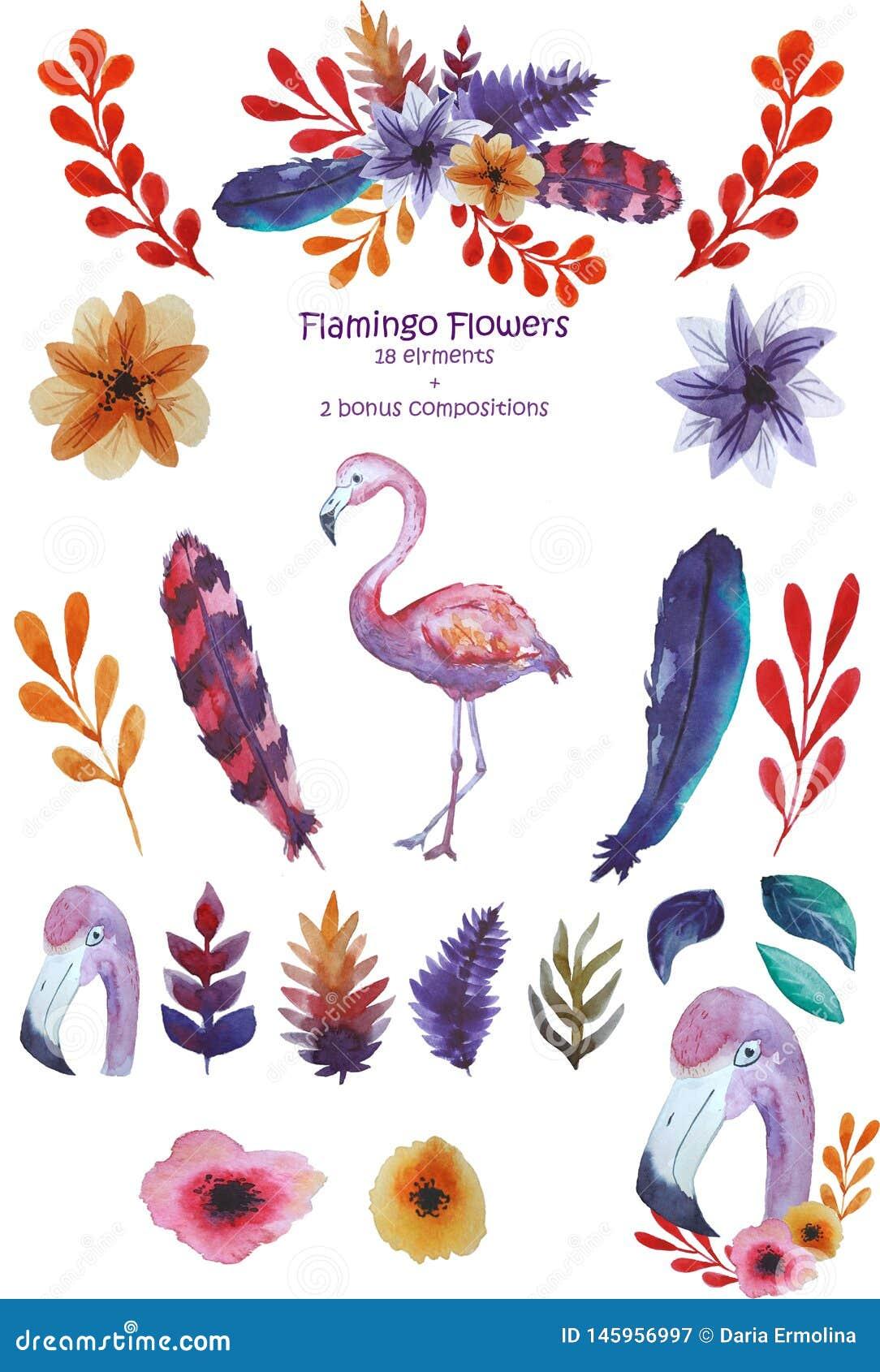 Sistema del flamenco