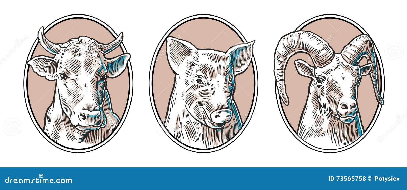 Sistema Del Icono De Los Animales Del Campo Cabezas Del Cerdo, De La ...
