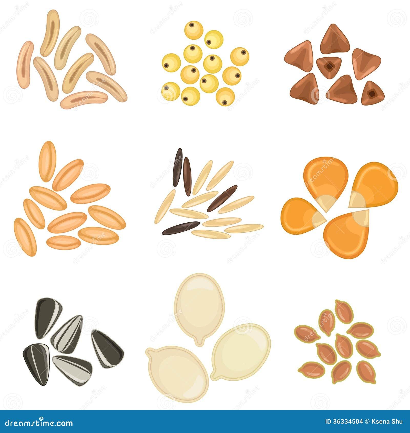 Sistema Del Icono De Los Granos De Cereales Ilustración