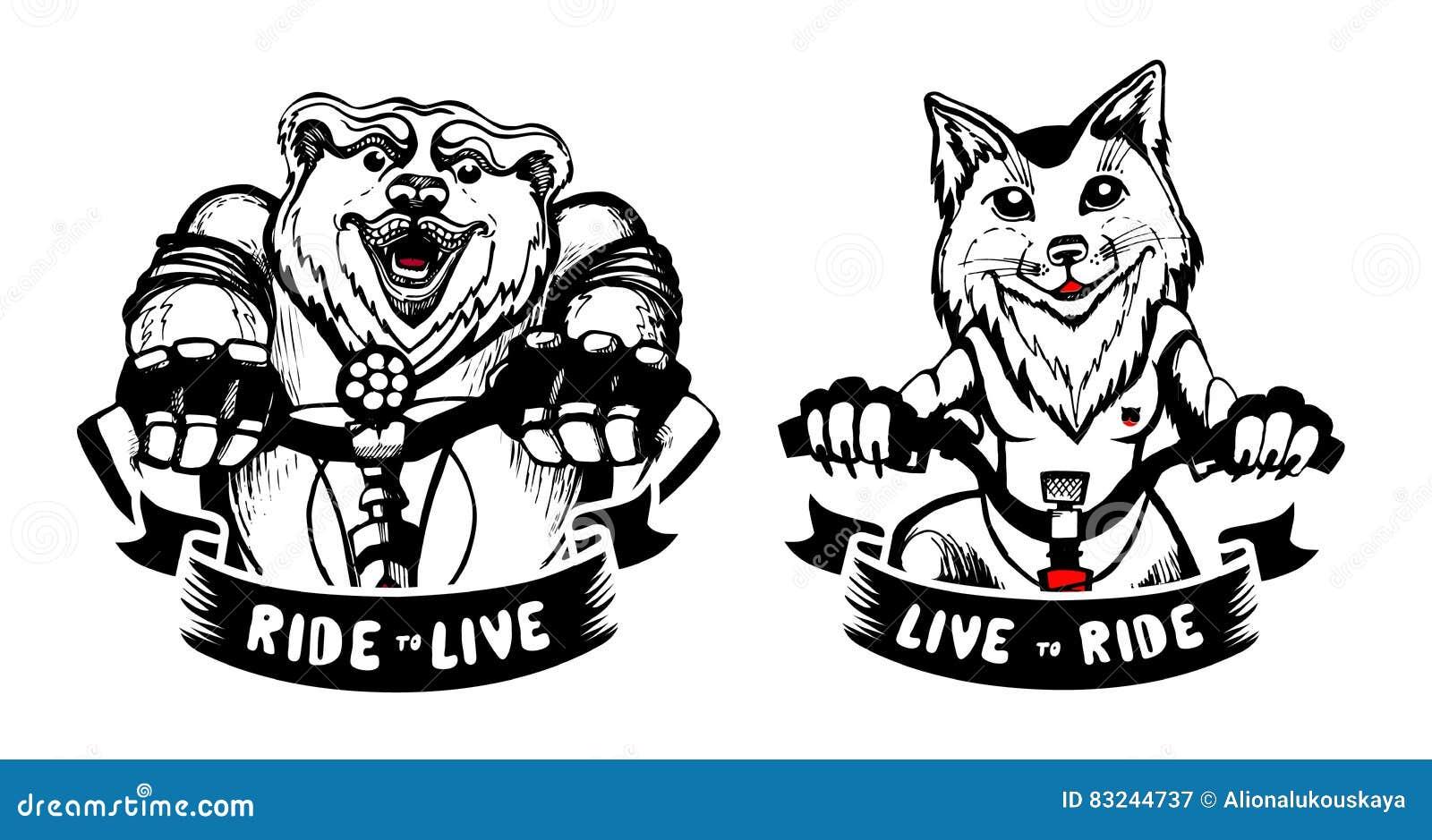 Sistema del oso y de un zorro en bosquejo de la bicicleta, dibujo de la mano animales del bosque aislados