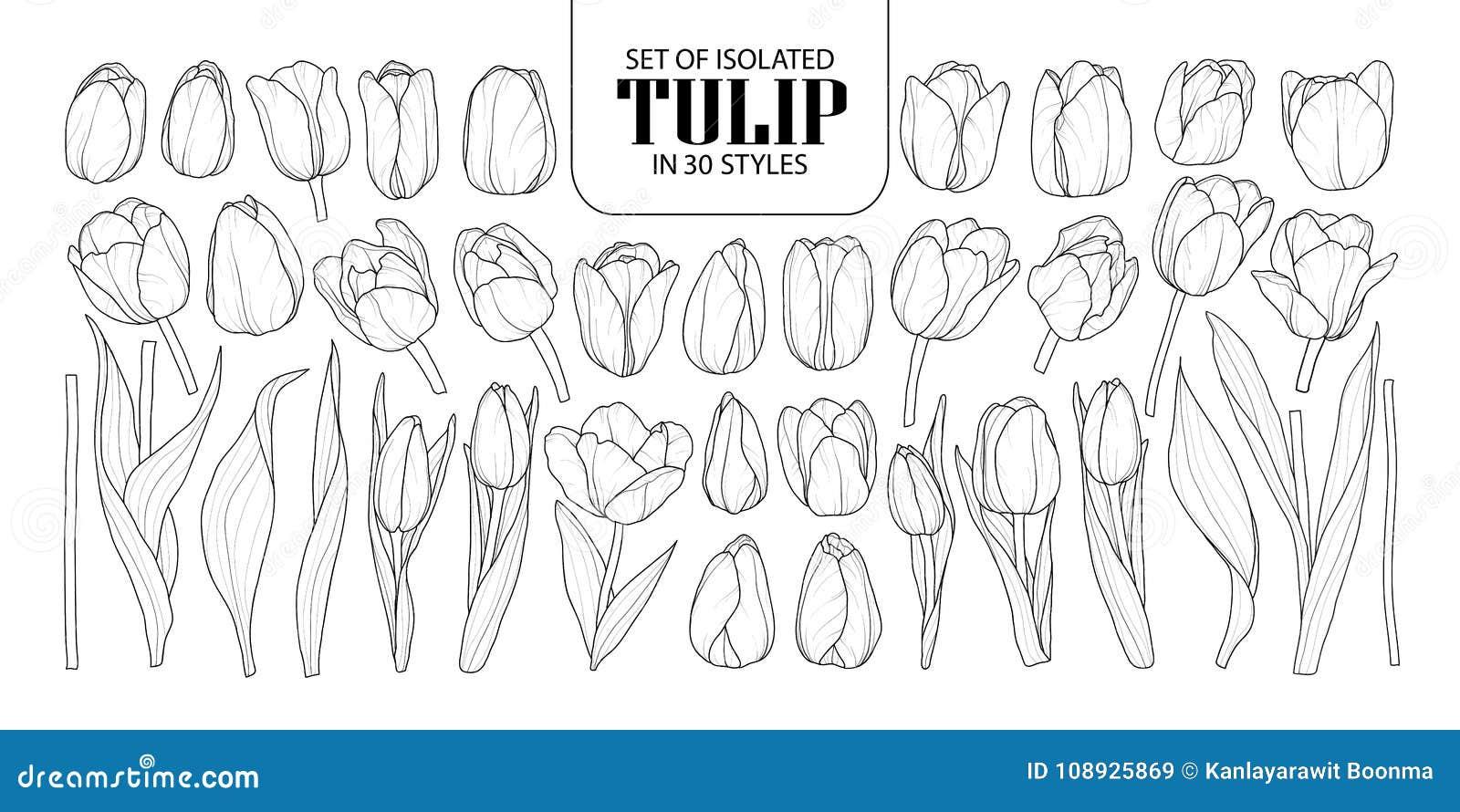 Sistema del tulipán aislado en 30 estilos Vecto dibujado mano linda de la flor